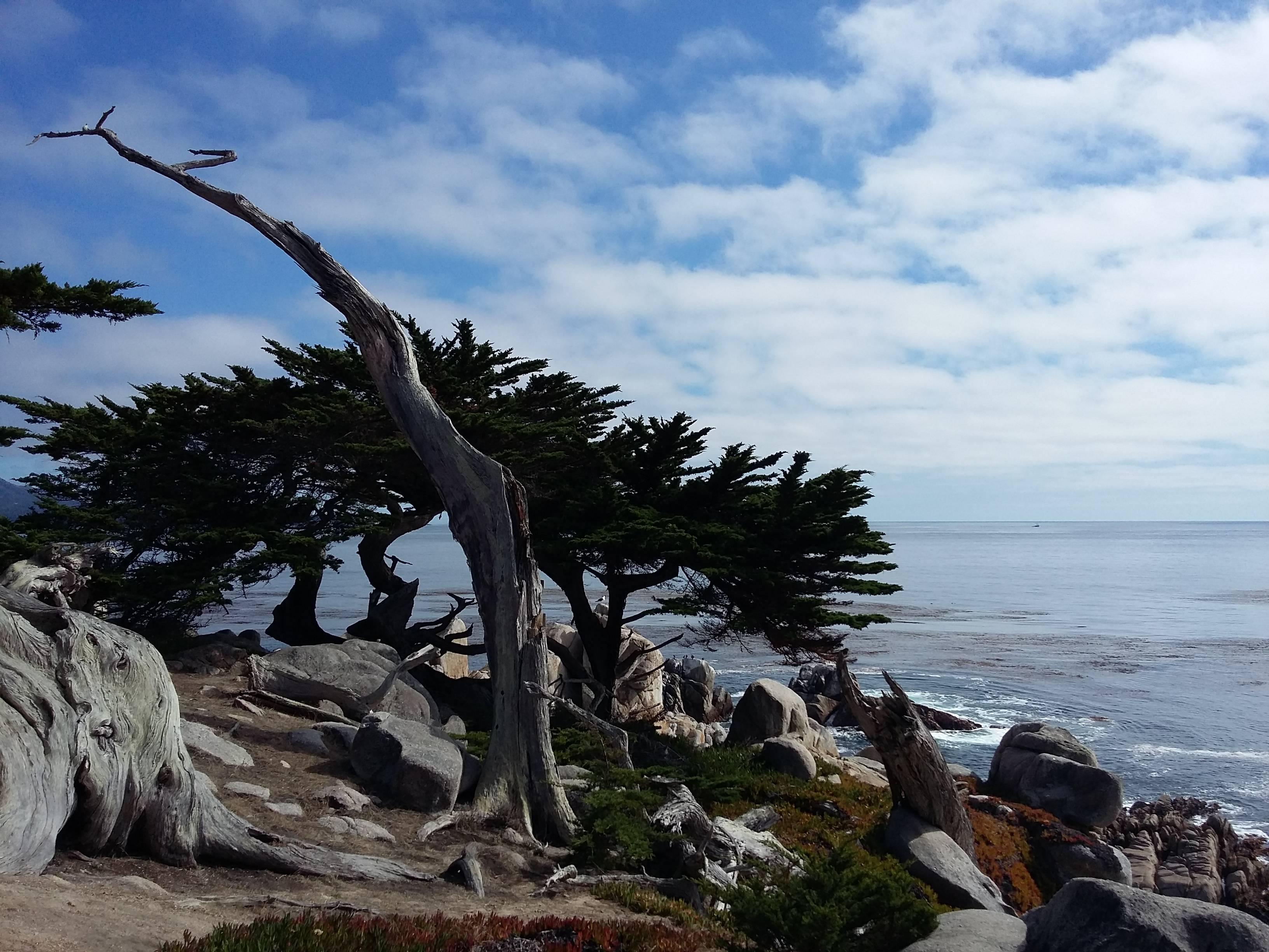 Photo 1: 17 mile drive - De Monterey vers Carmel