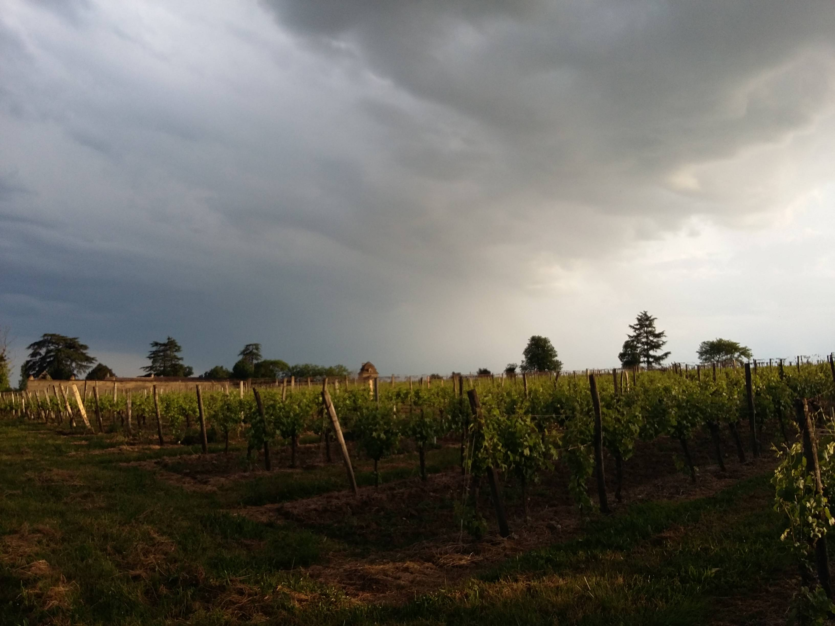 Photo 2: Du bon vin au Château Le Raz