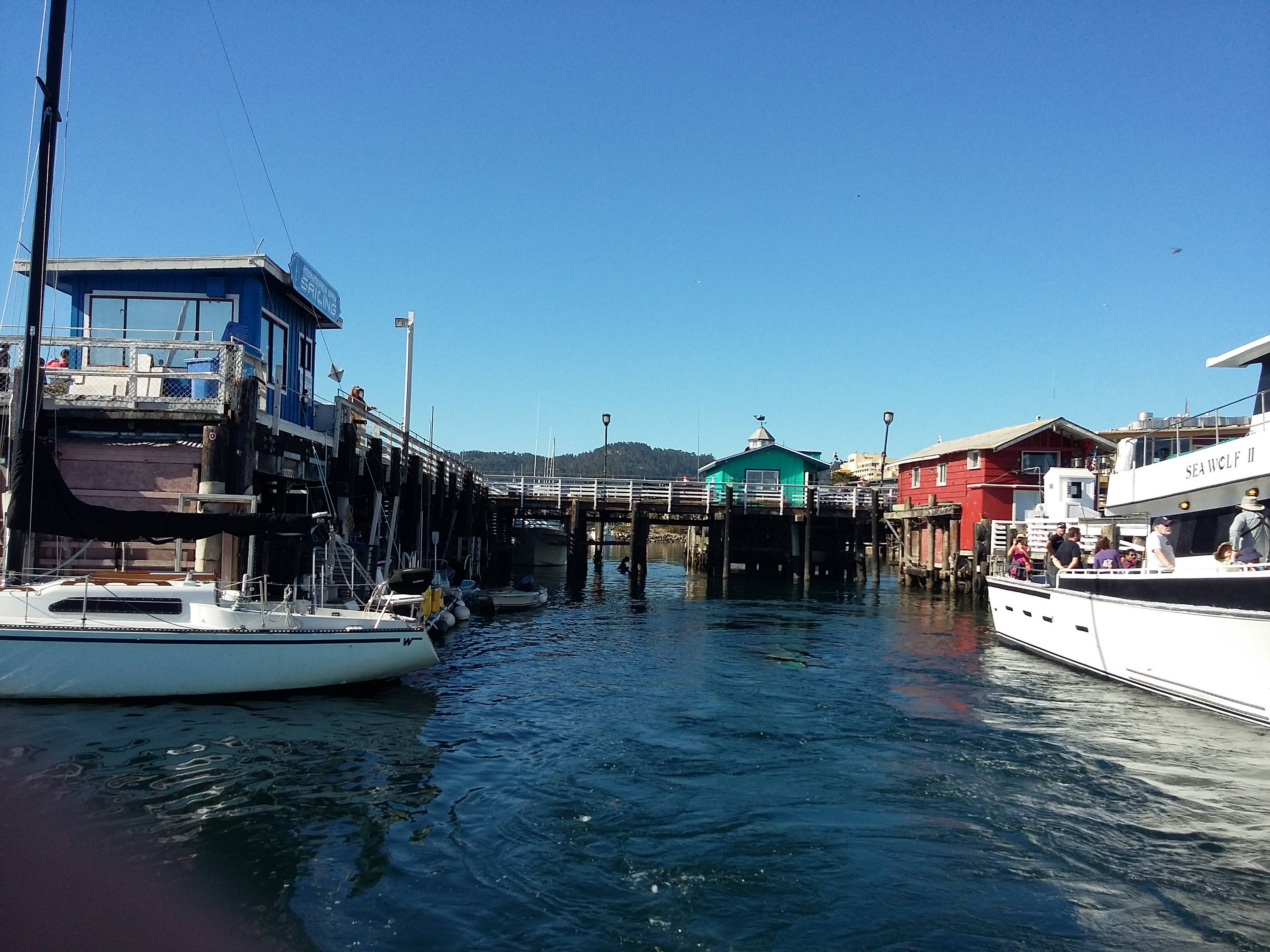 Photo 1: Aller voir les baleines au départ de Monterey