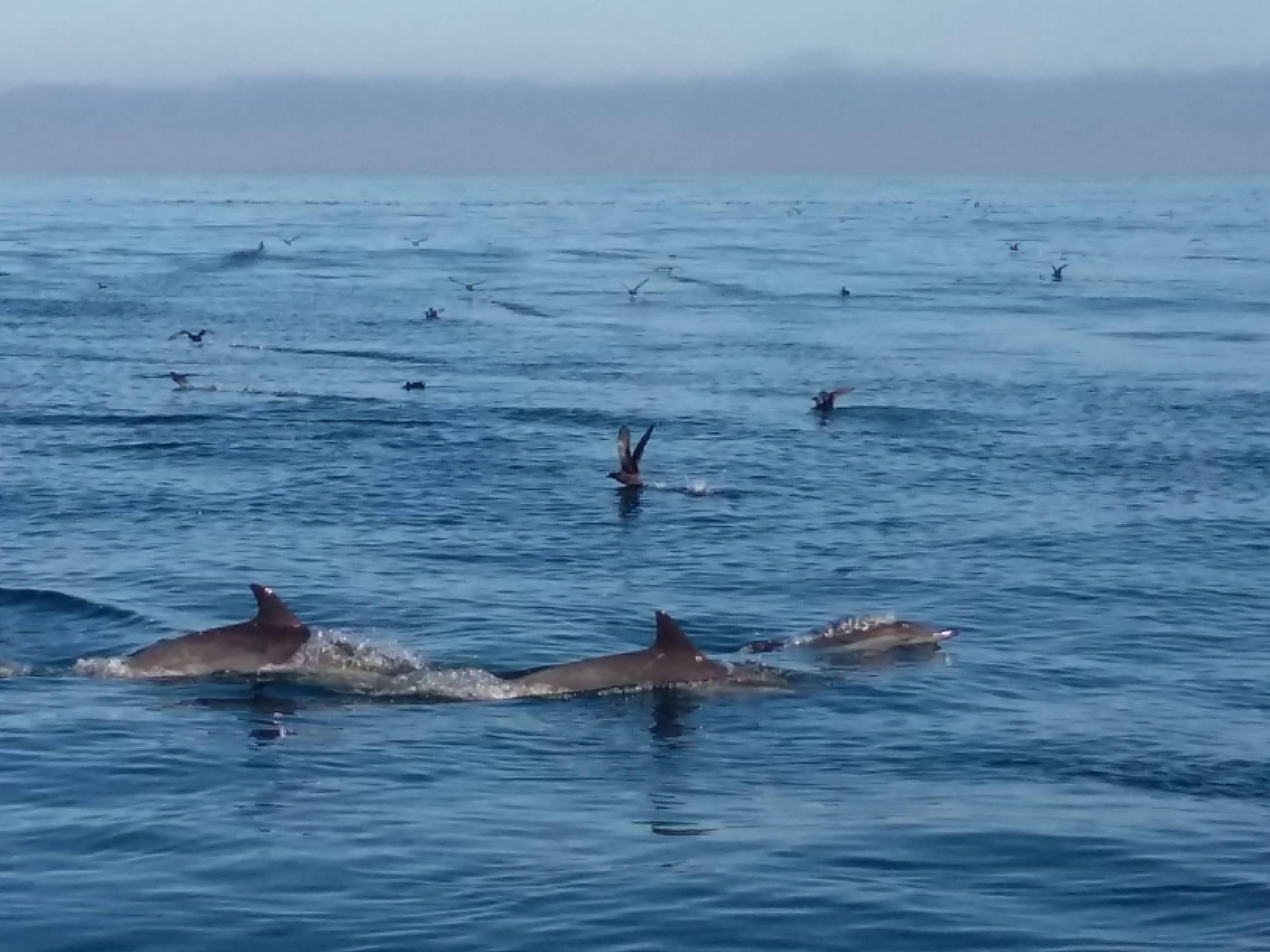 Photo 2: Aller voir les baleines au départ de Monterey
