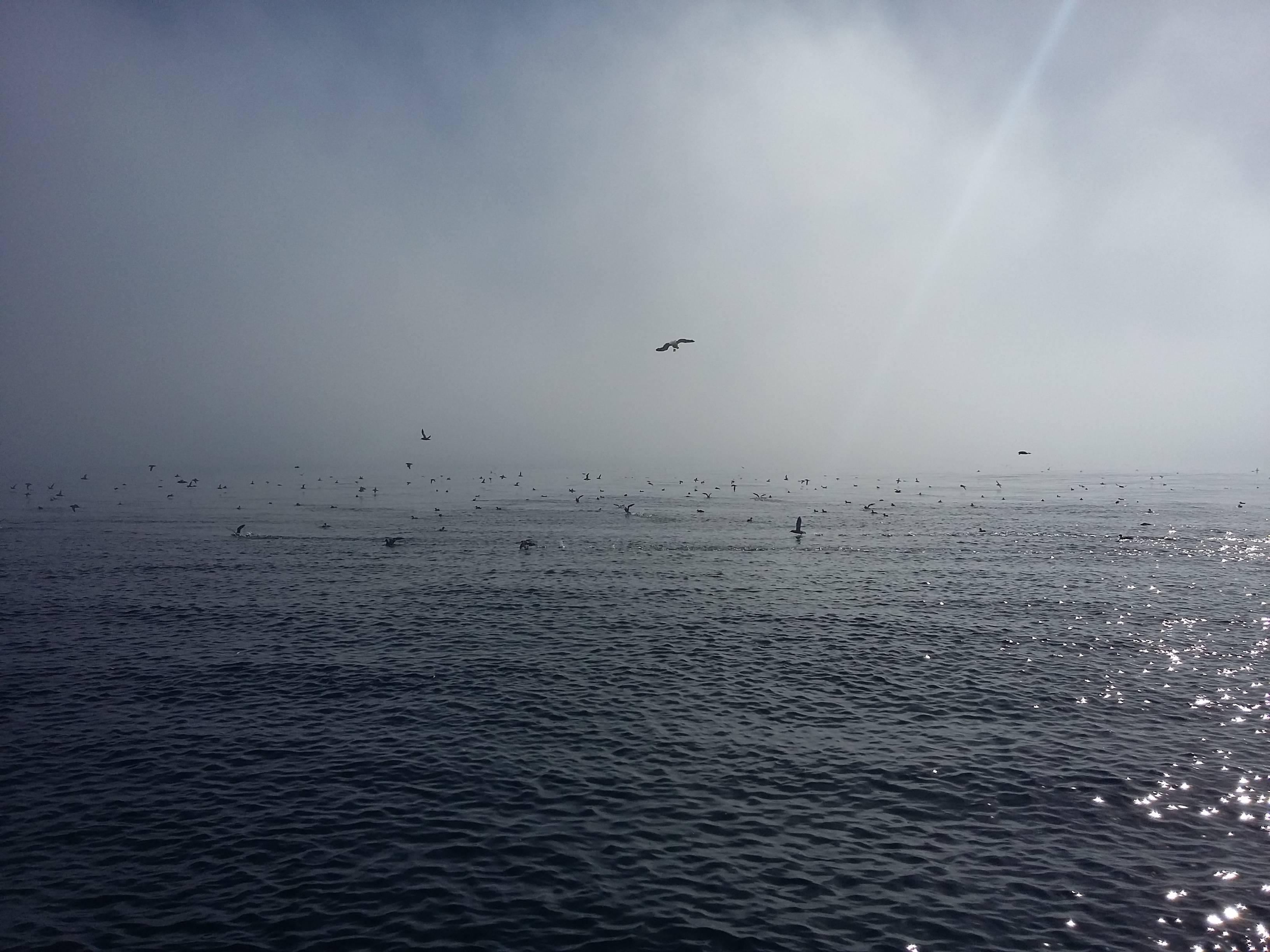 Photo 3: Aller voir les baleines au départ de Monterey