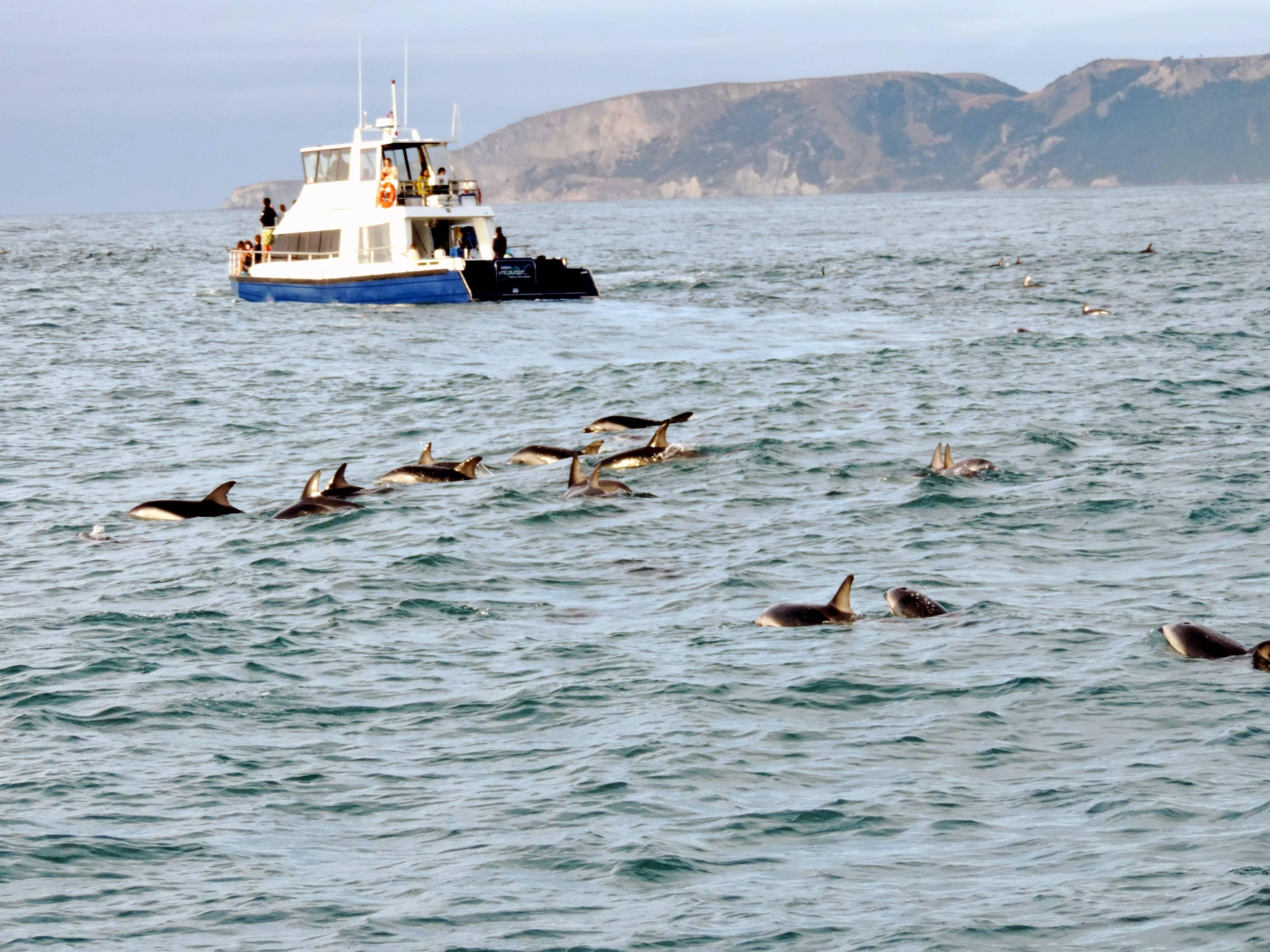 Photo 1: Nager avec les dauphins à Kaikoura