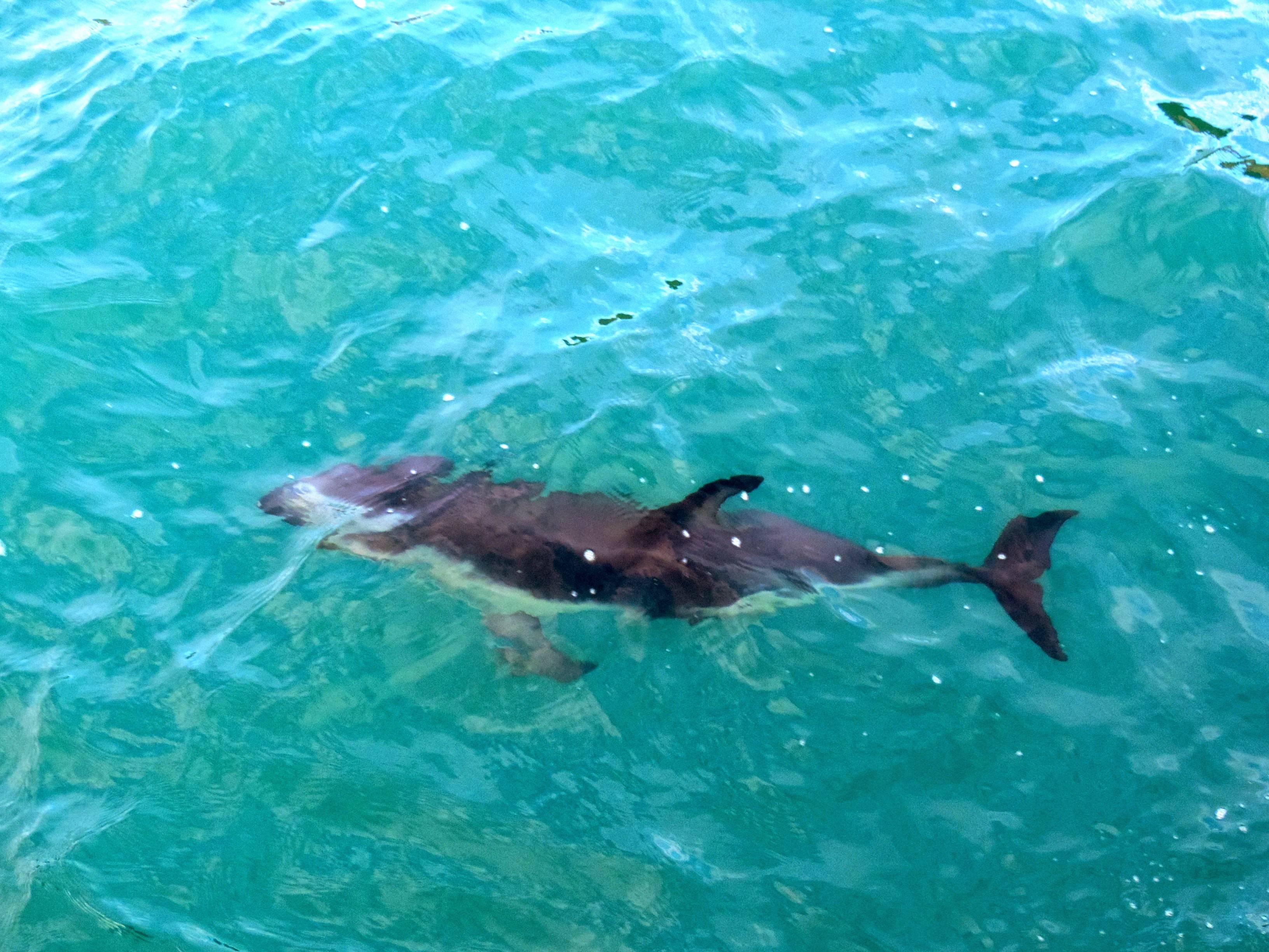 Photo 2: Nager avec les dauphins à Kaikoura