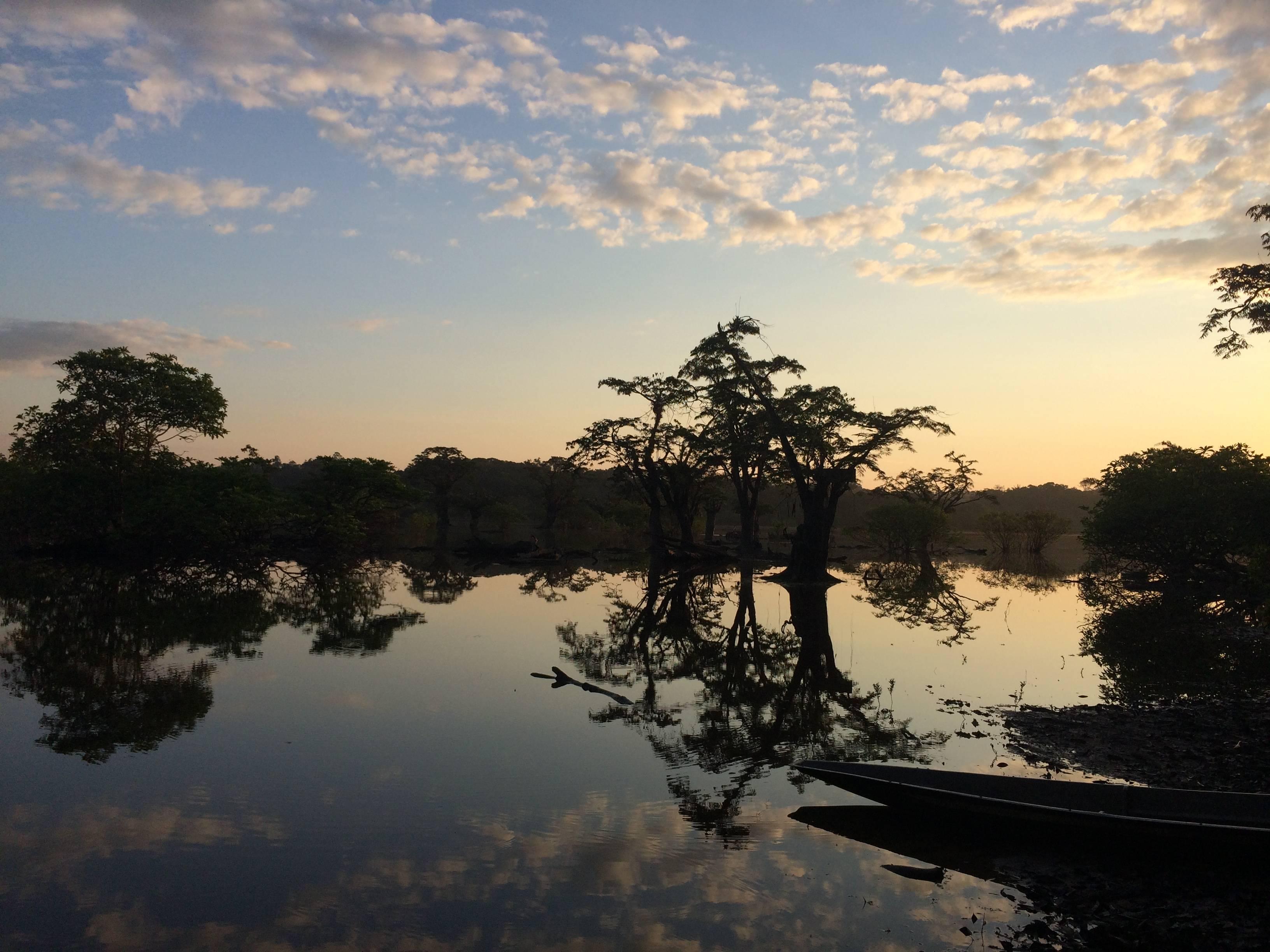 Photo 2: La Réserve Cuyabeno, au milieu de l'Amazonie