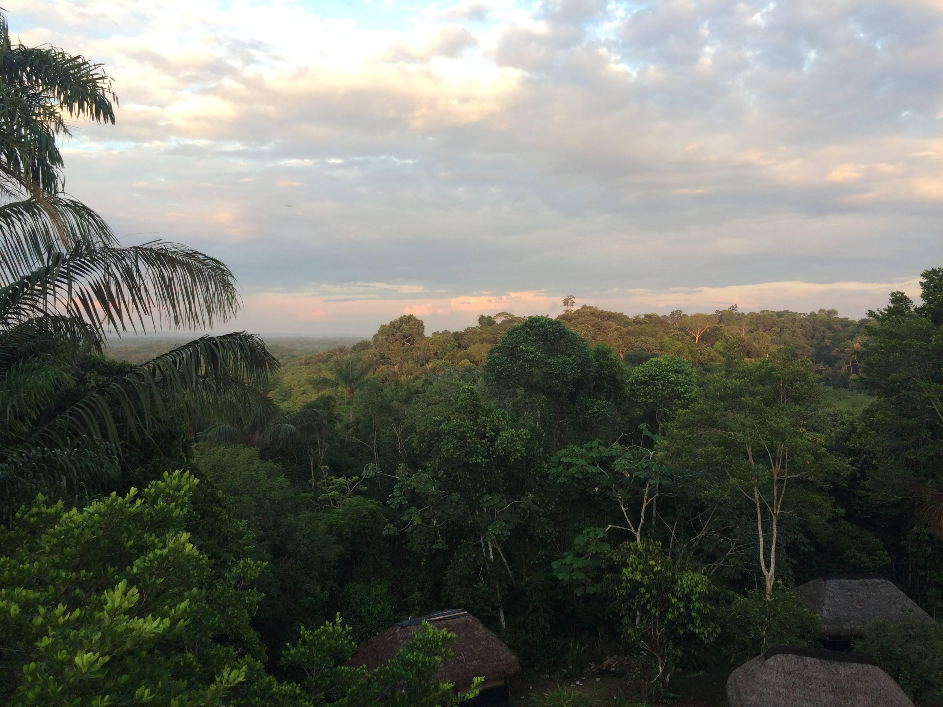Photo 3: La Réserve Cuyabeno, au milieu de l'Amazonie
