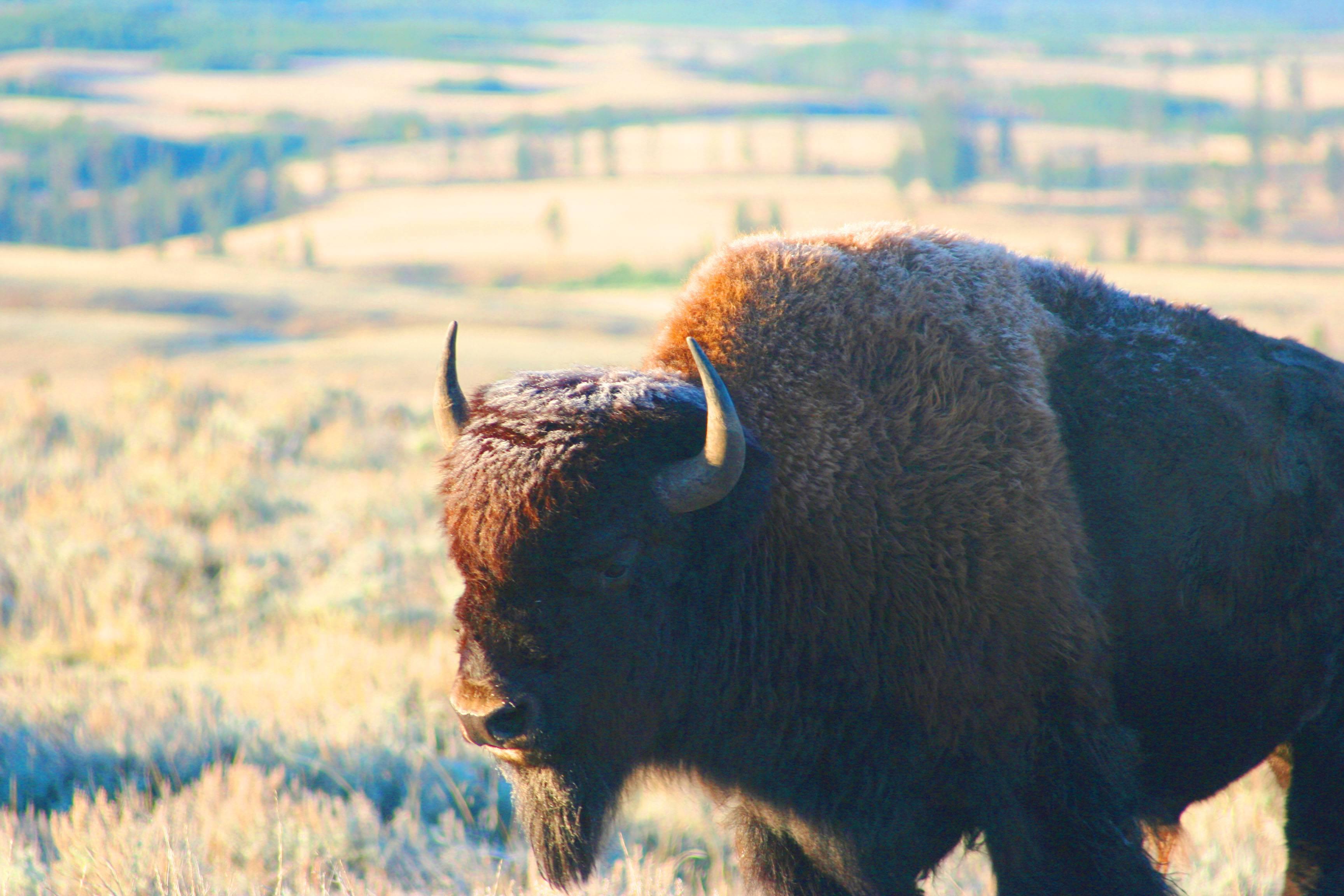 Photo 3: Yellowstone National Parc