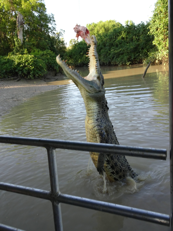 "Photo 2: Darwin et les ""jumping crocodiles cruises"""