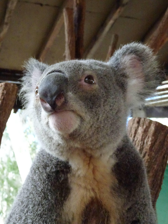 Photo 3: Billabong Sanctuary, un sanctuaire pour la faune Australienne