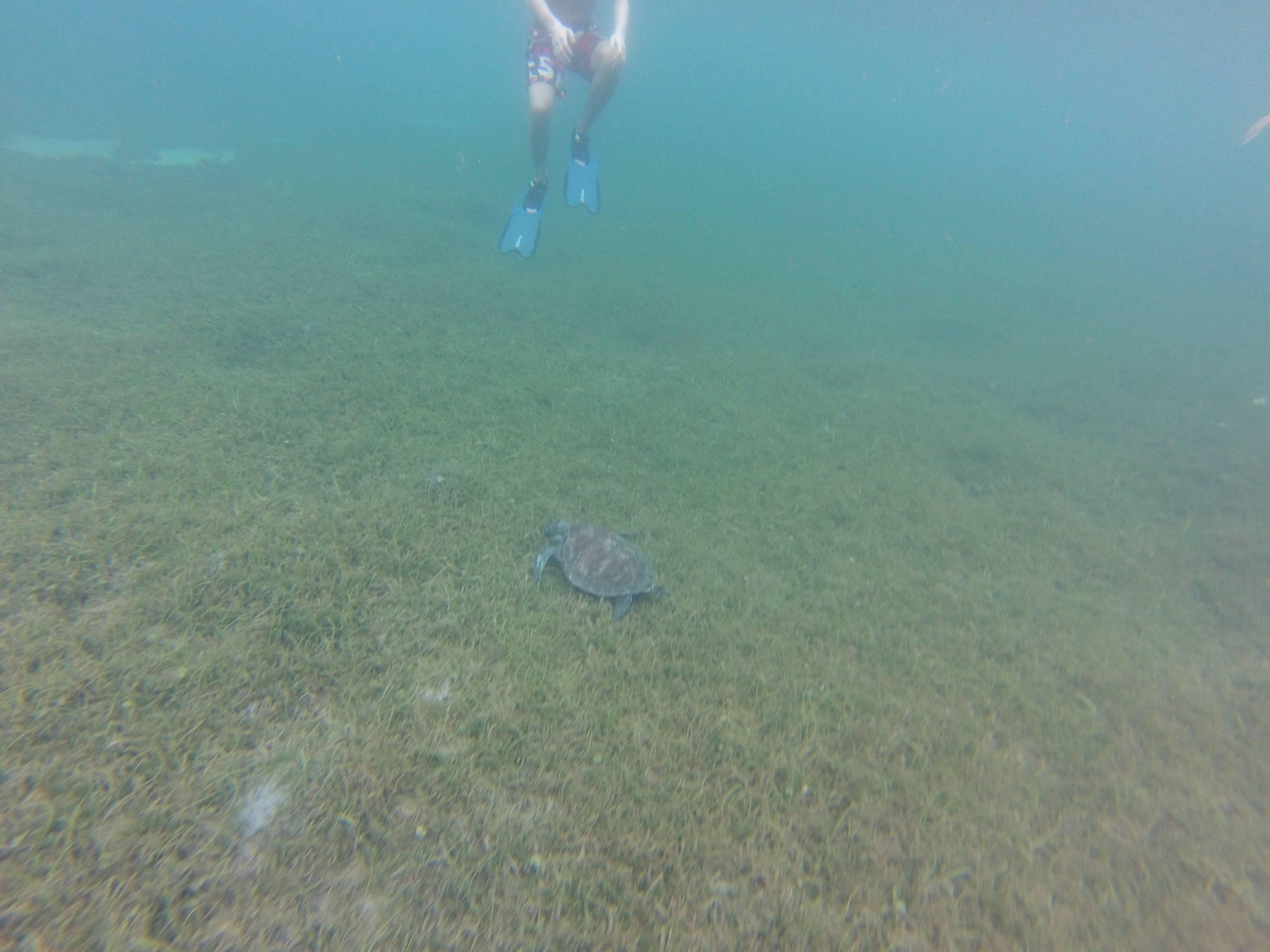 Photo 3: Martinique - PMT avec les tortues à Grande Anse