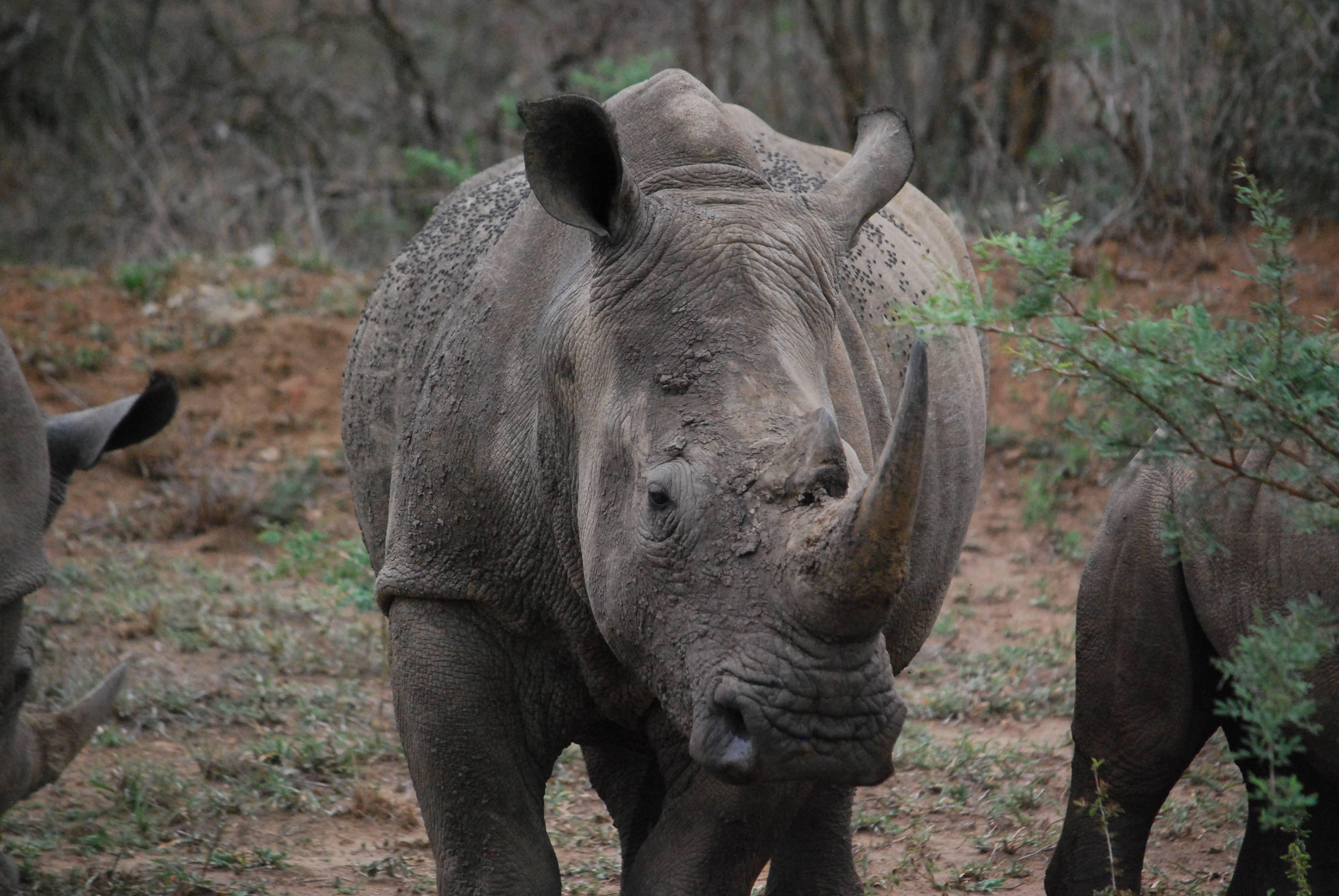 Photo 1: Hluhluwe-Umfolozi, un sublime parc d'Afrique du Sud