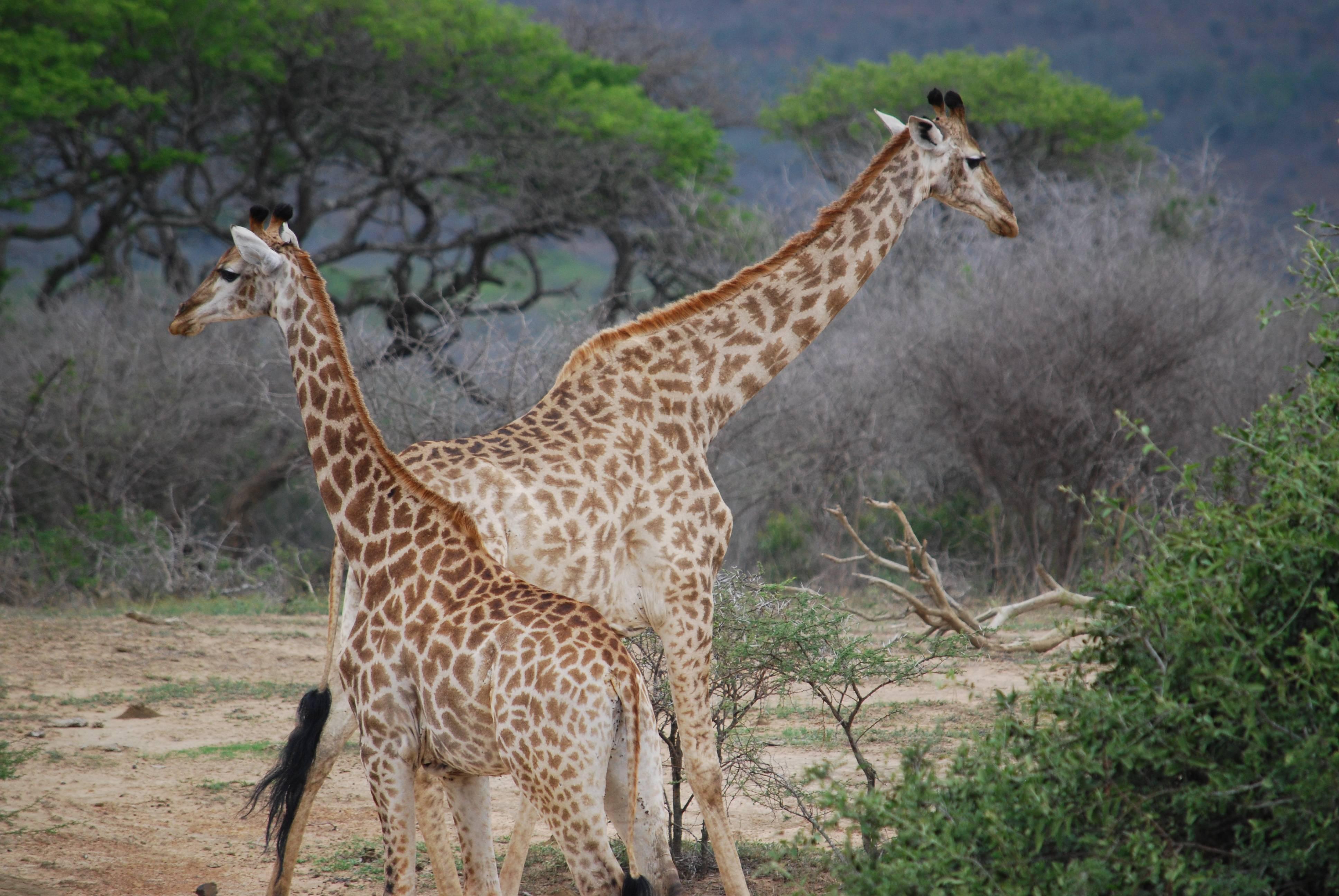 Photo 3: Hluhluwe-Umfolozi, un sublime parc d'Afrique du Sud