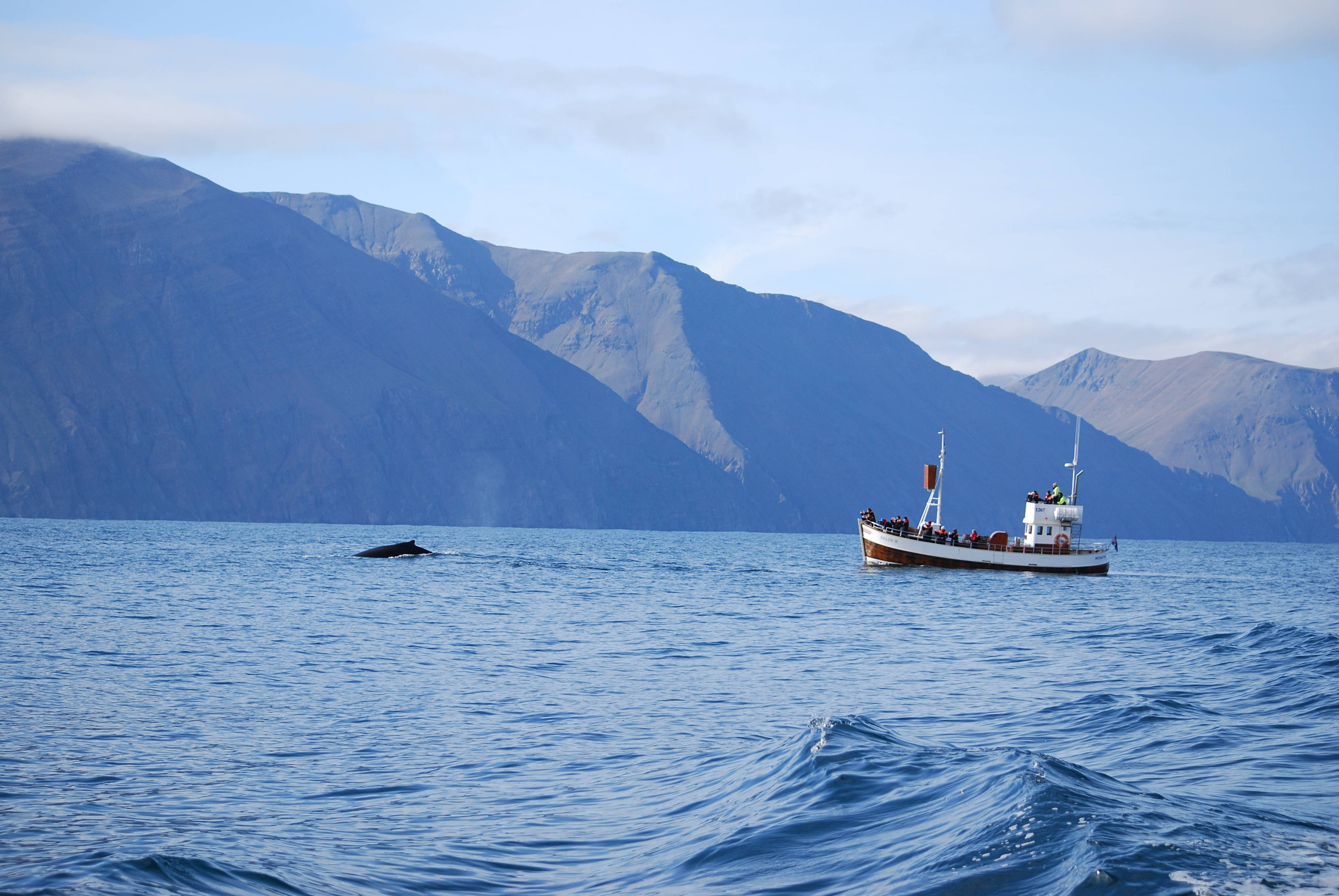 Photo 2: Husavik et ses baleines