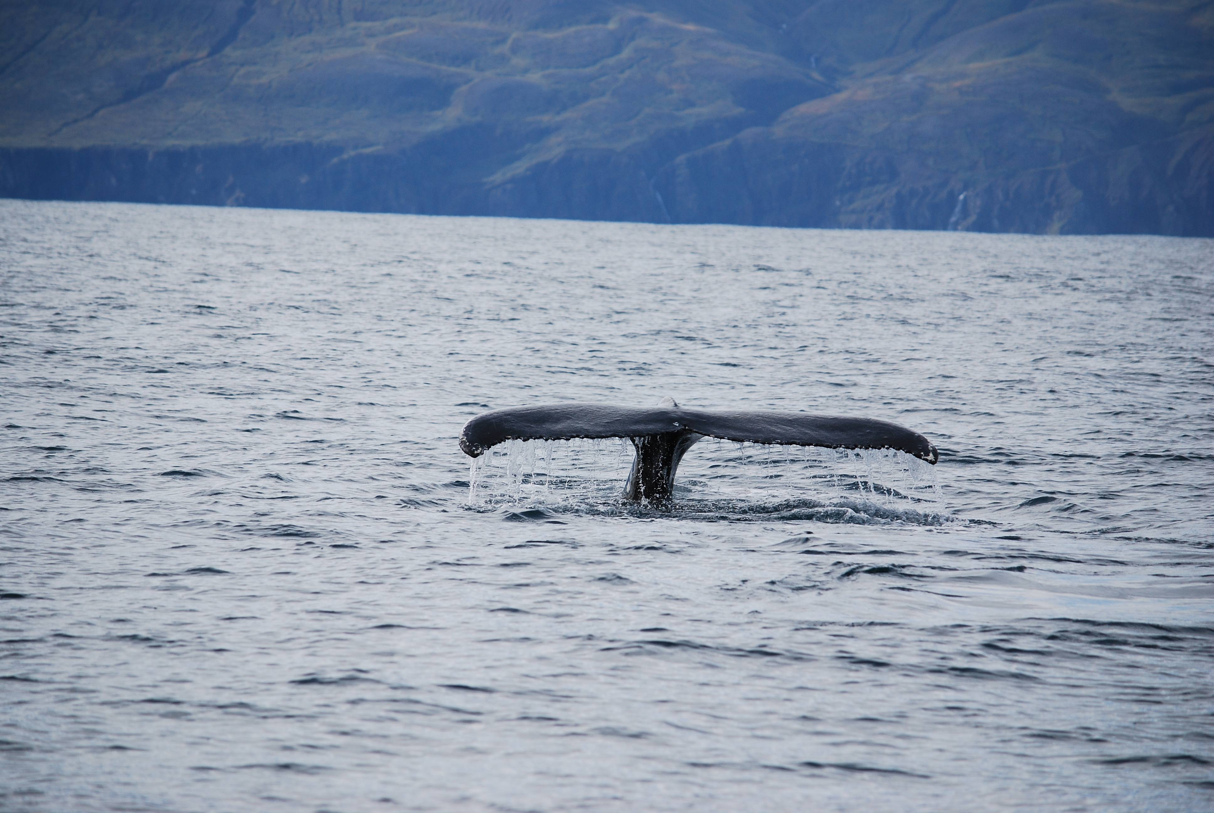 Photo 3: Husavik et ses baleines