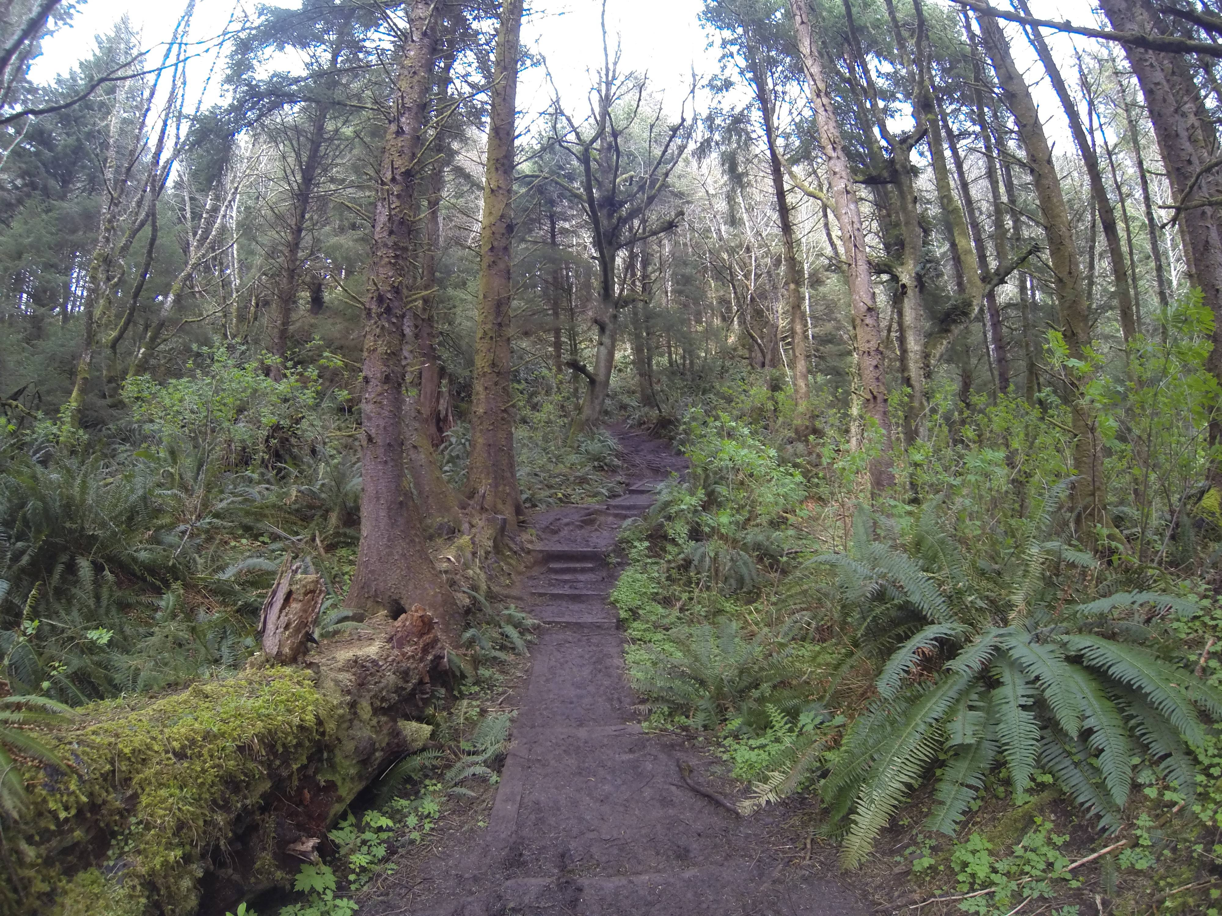 Photo 1: Ecola State Park