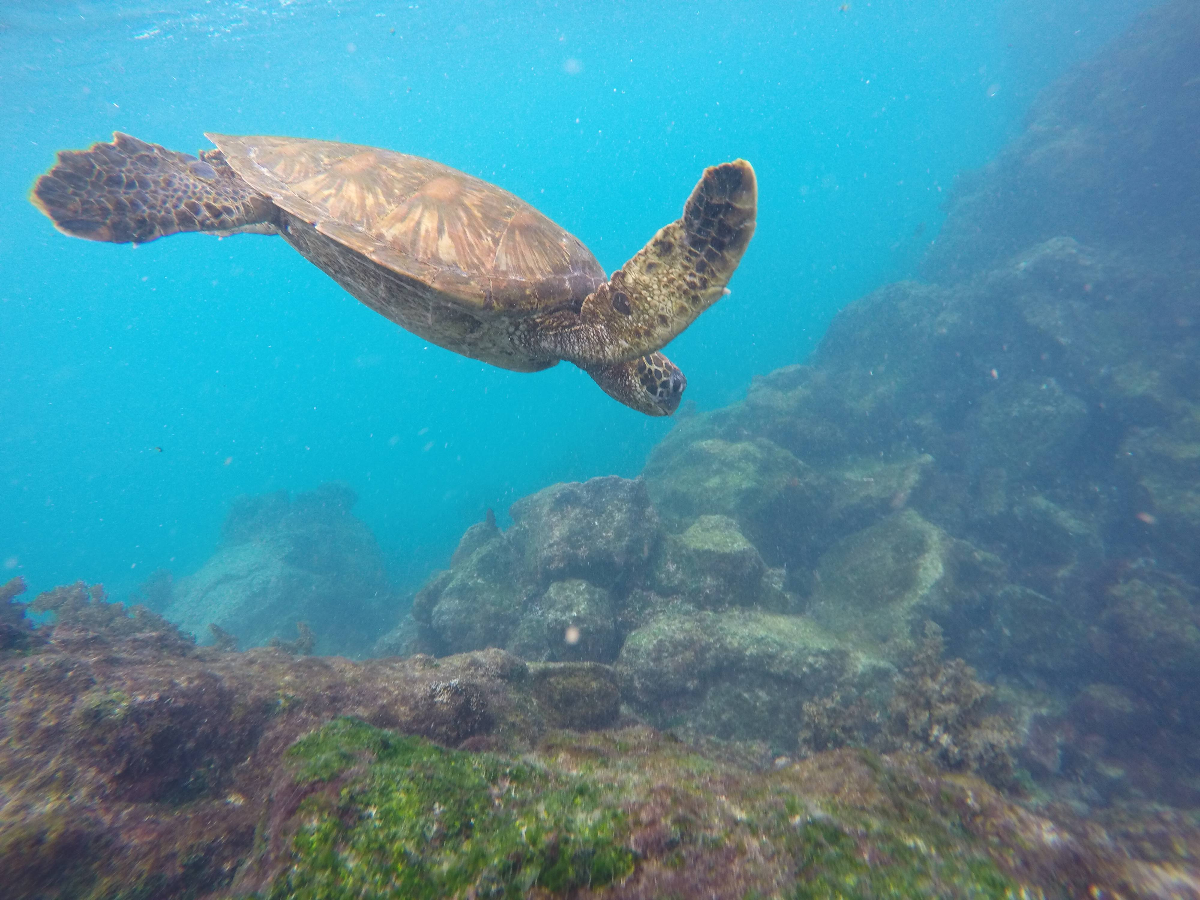 Photo 3: Les Iles Galapagos, un paradis!!!!