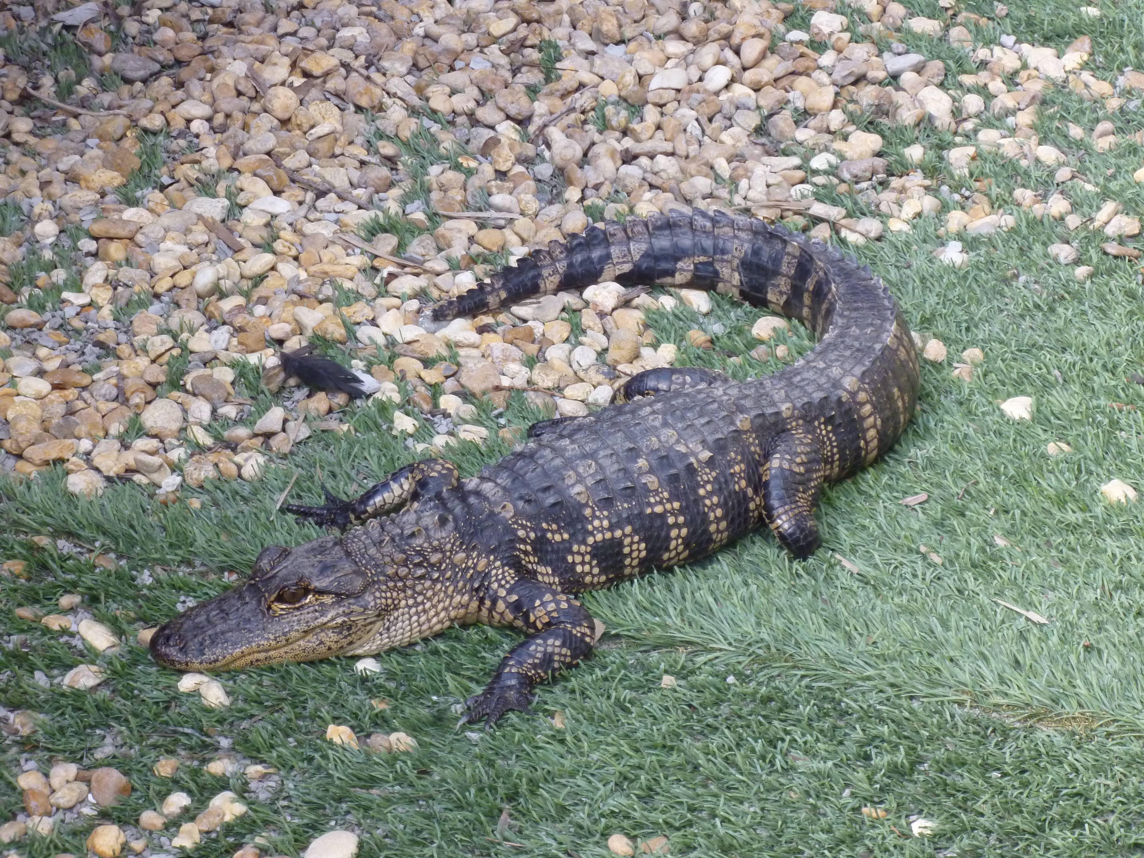 Photo 2: Une balade hors du temps dans les marécages des Everglades en Floride