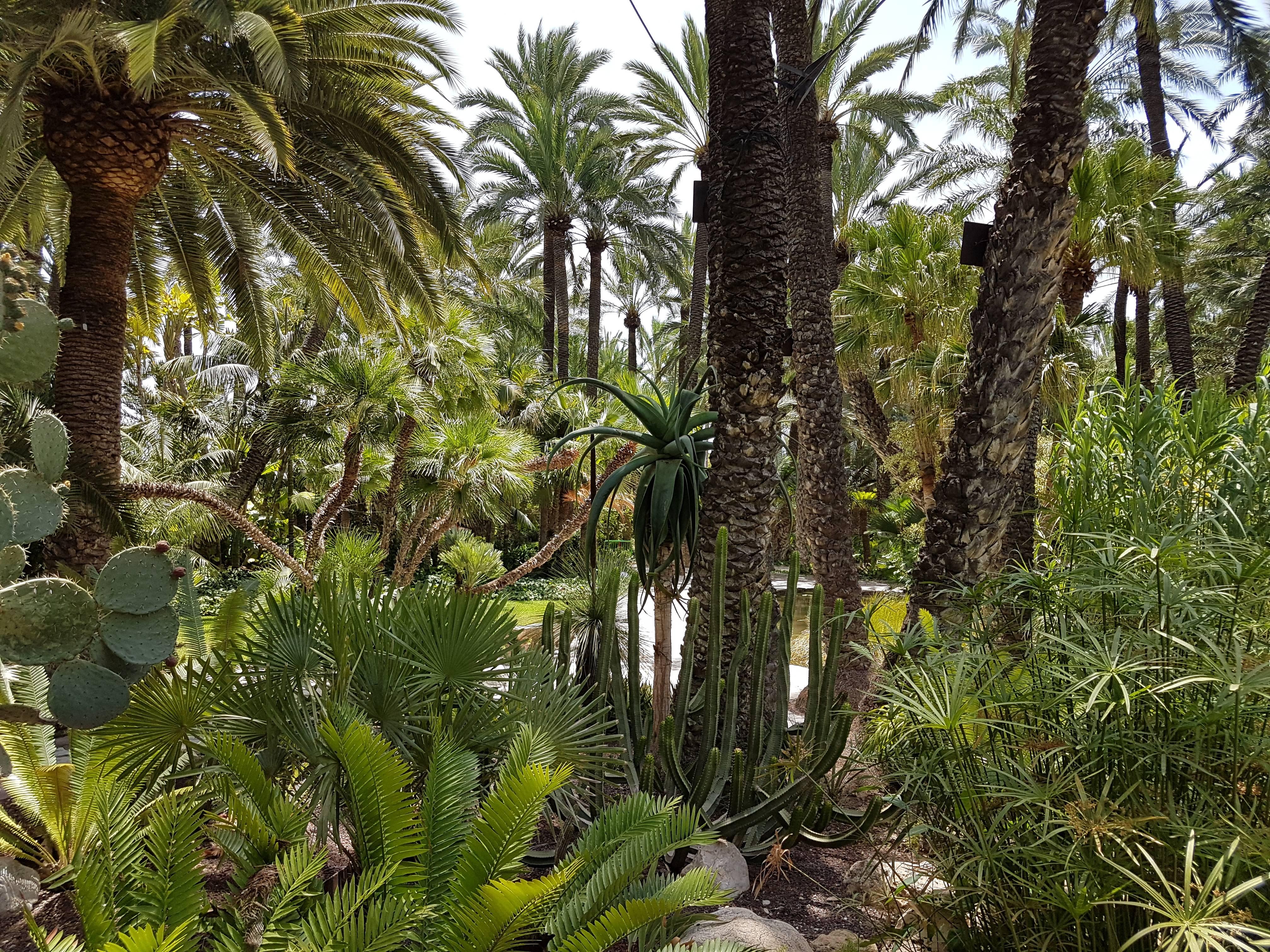 Photo 1: Elche - El jardin del cura - Un endroit impressionnant