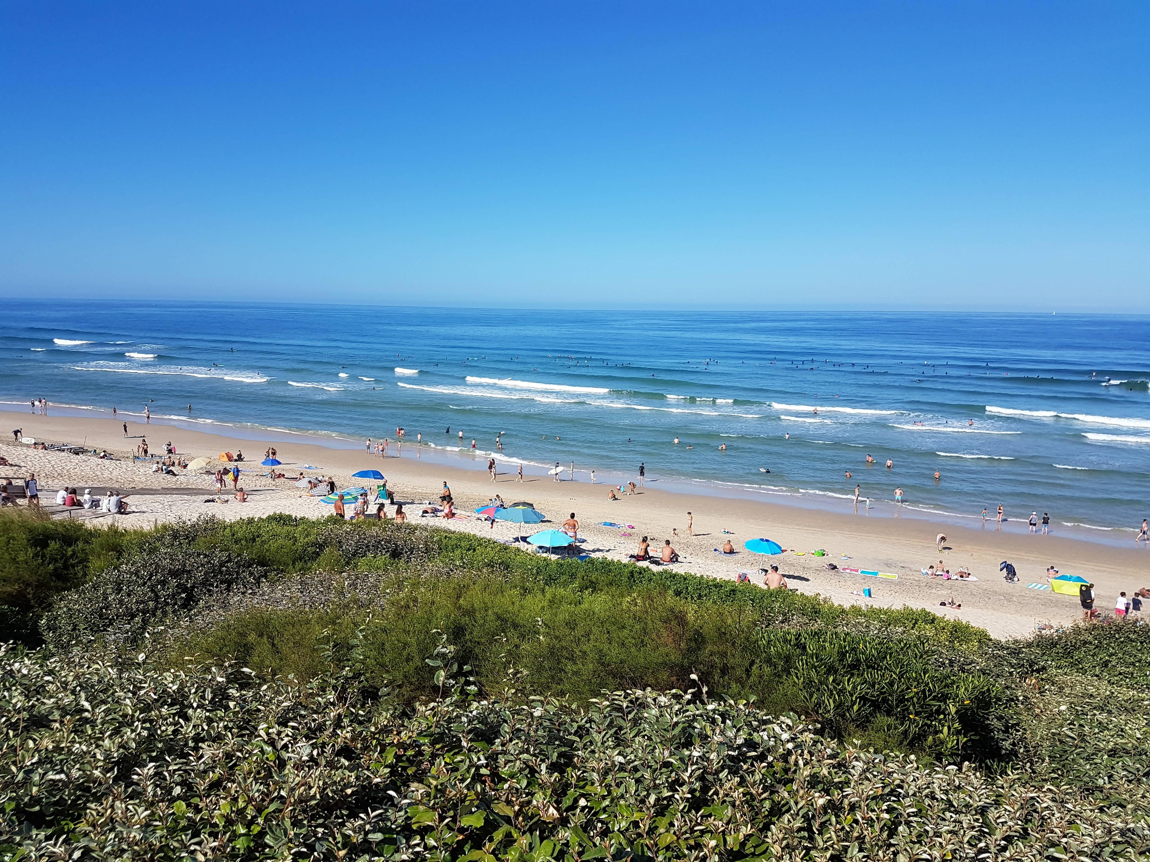 Photo 3: Bisca et l'océan