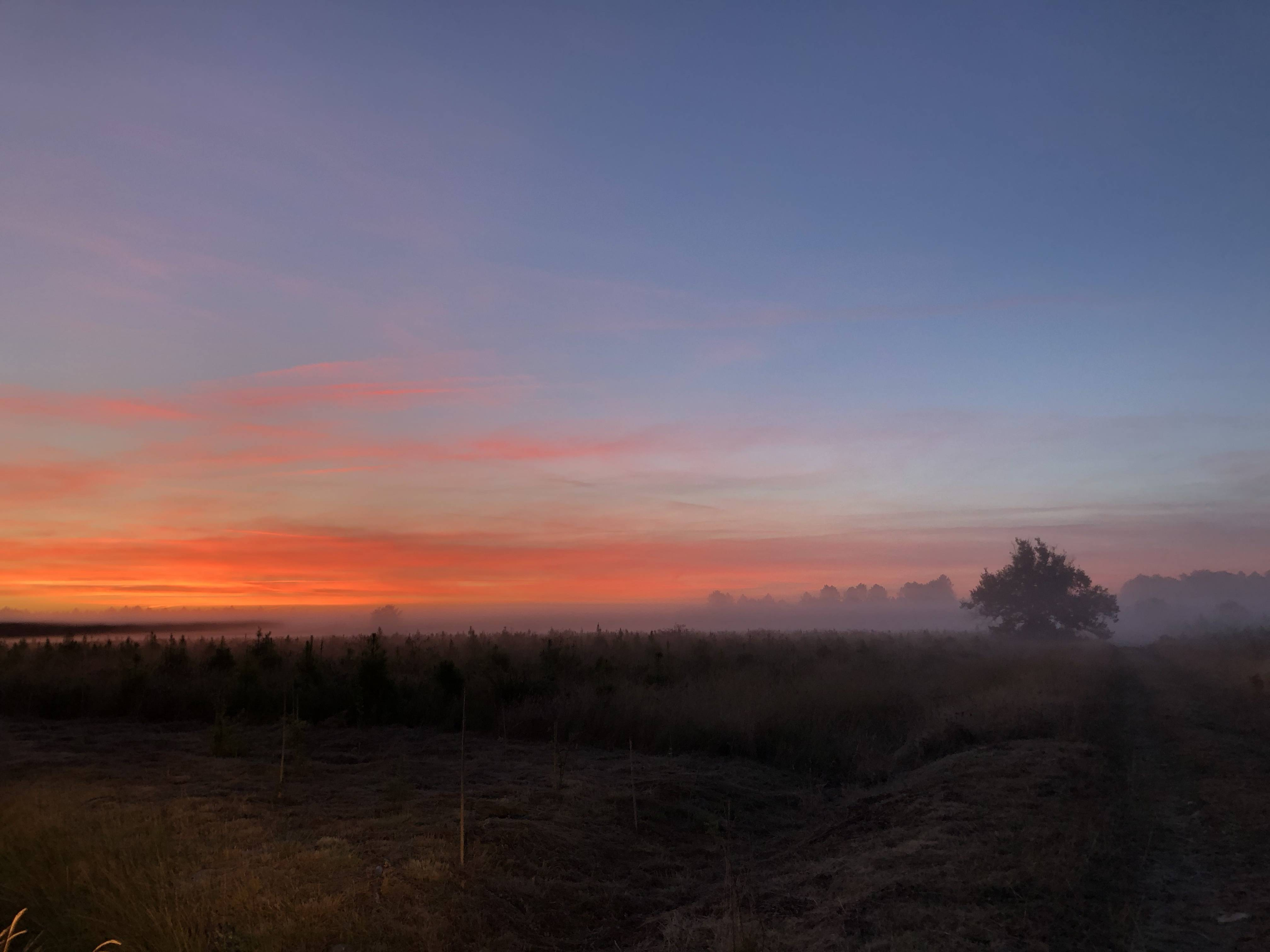 Photo 3: Biscarrosse au lever du jour