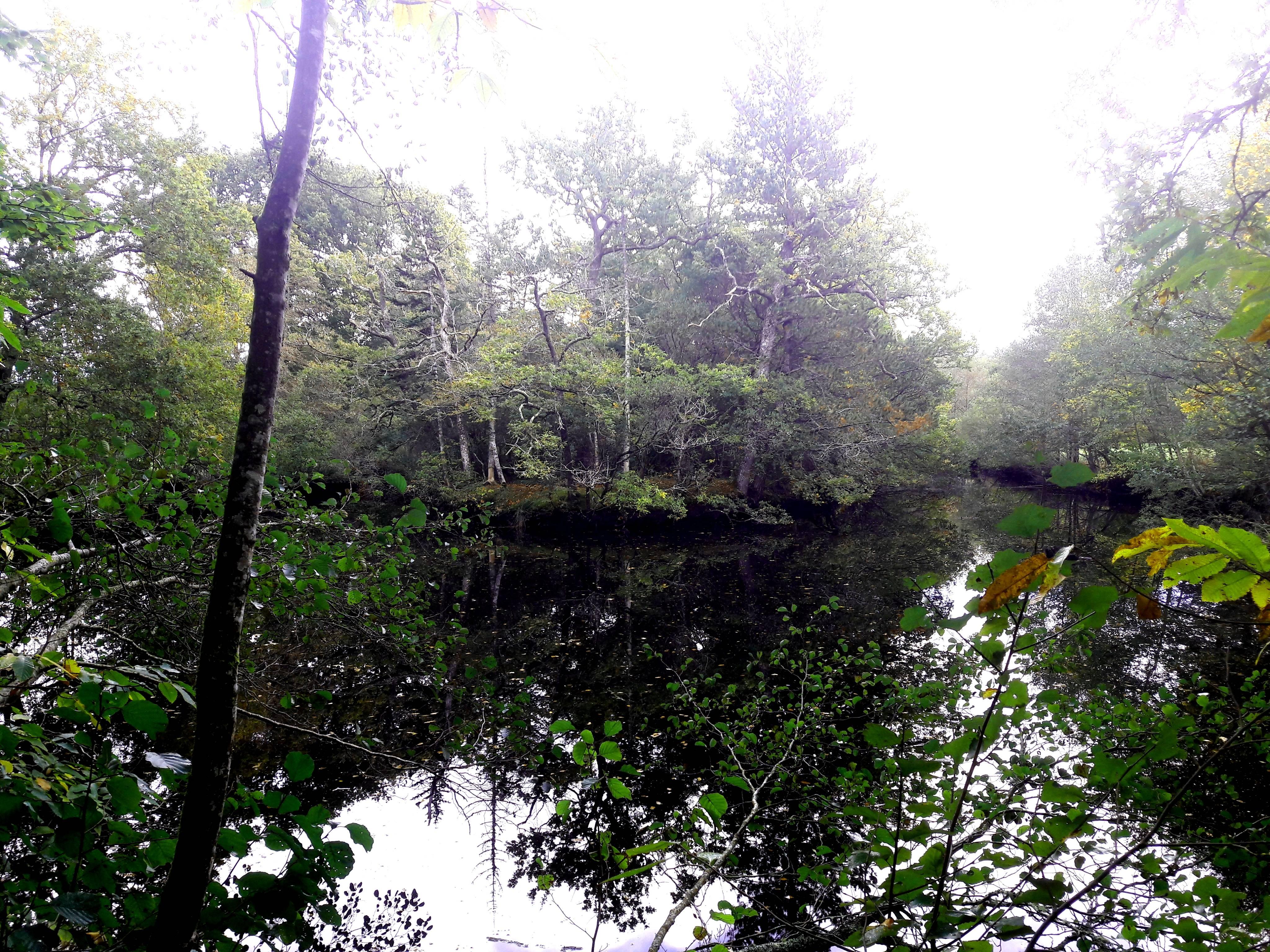 Photo 3: Balade au parc de Keravéon, Erdeven