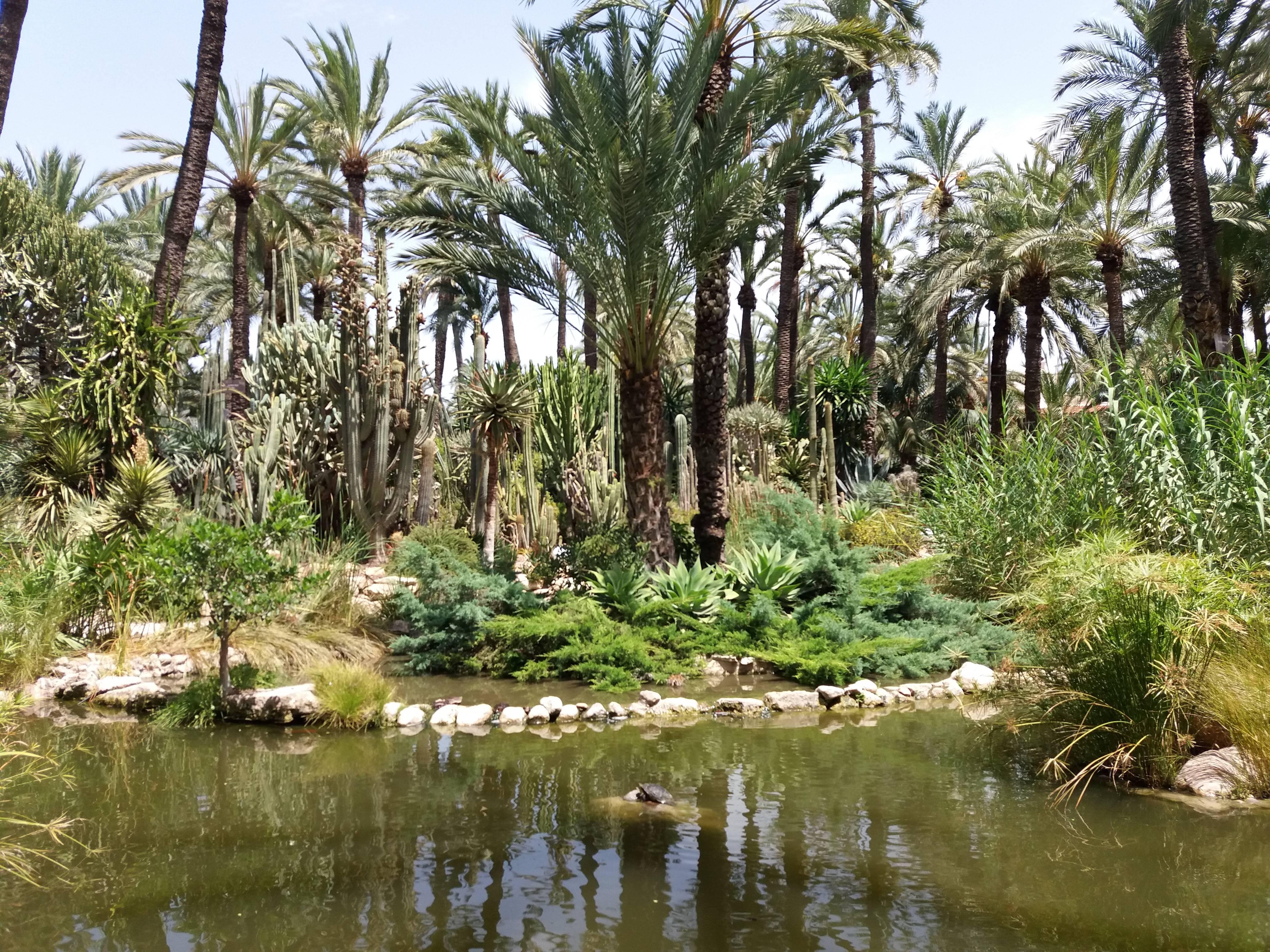 Photo 2: Elche - El jardin del cura - Un endroit impressionnant