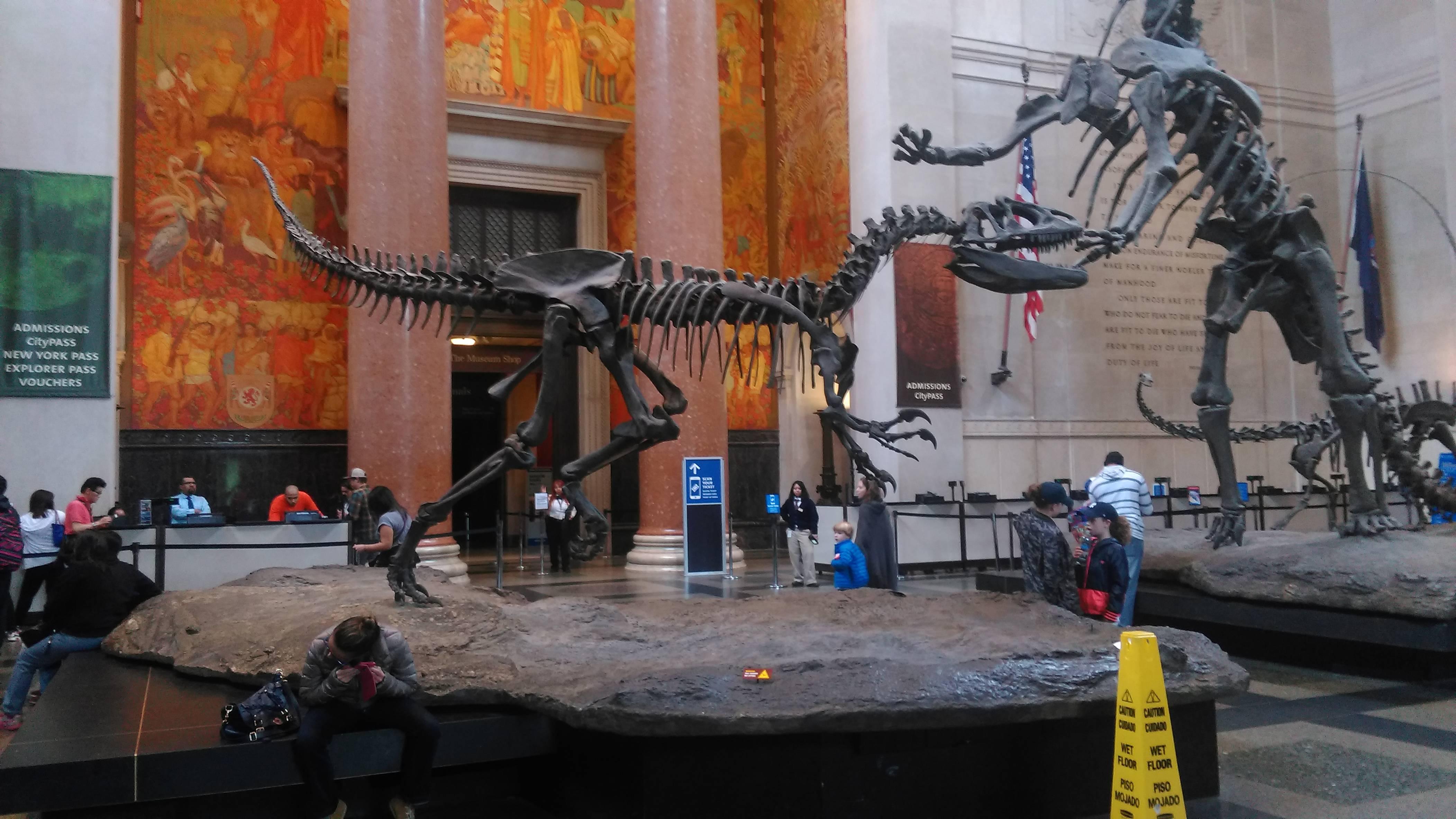 Photo 1: Une journée au Musée ! (Musée d'Histoire Naturelle)
