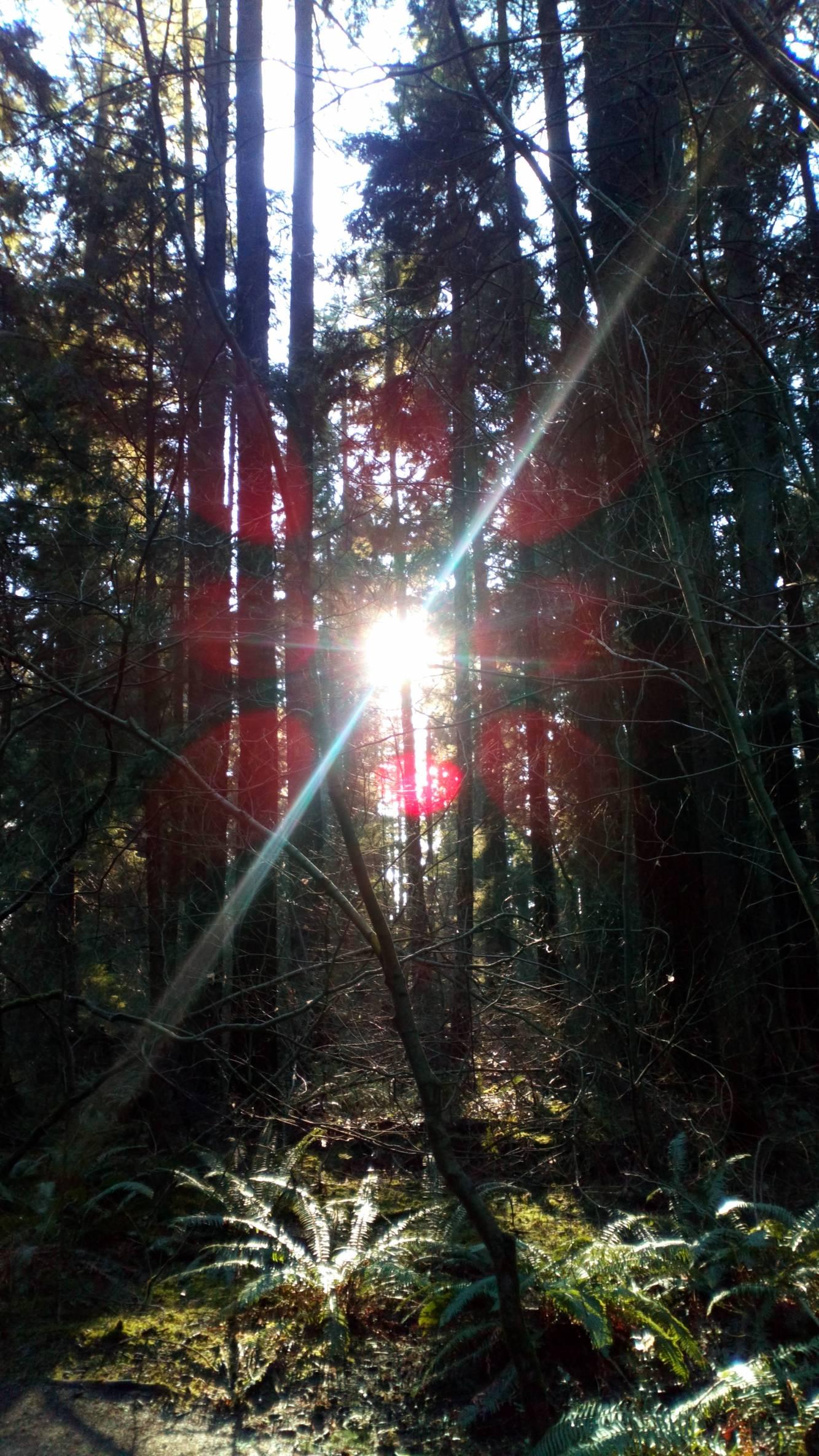 Photo 2: De Vancouver à Mont Seymour