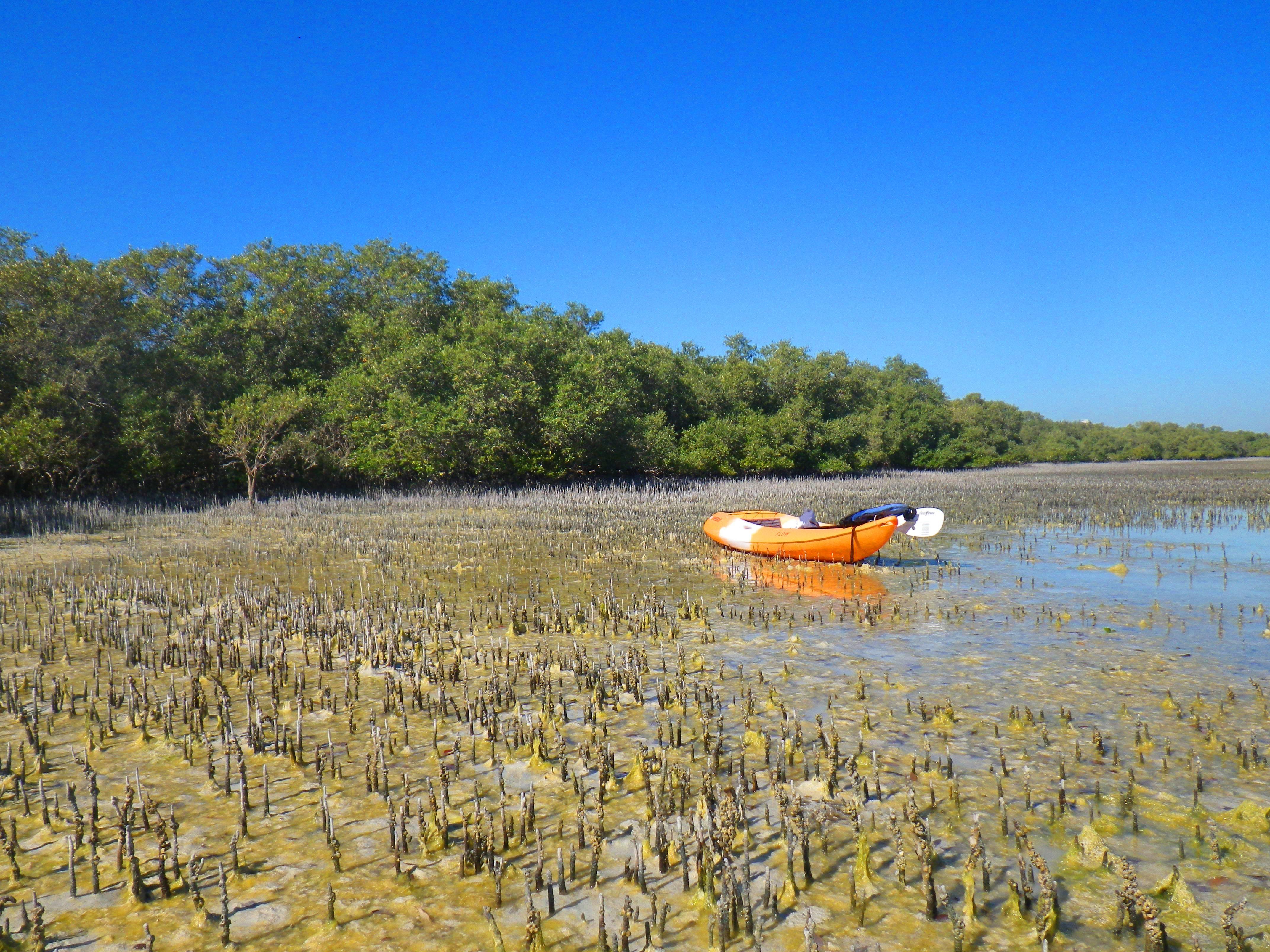 Photo 3: La Mangroove d'Abu Dhabi!! Exceptionnelle