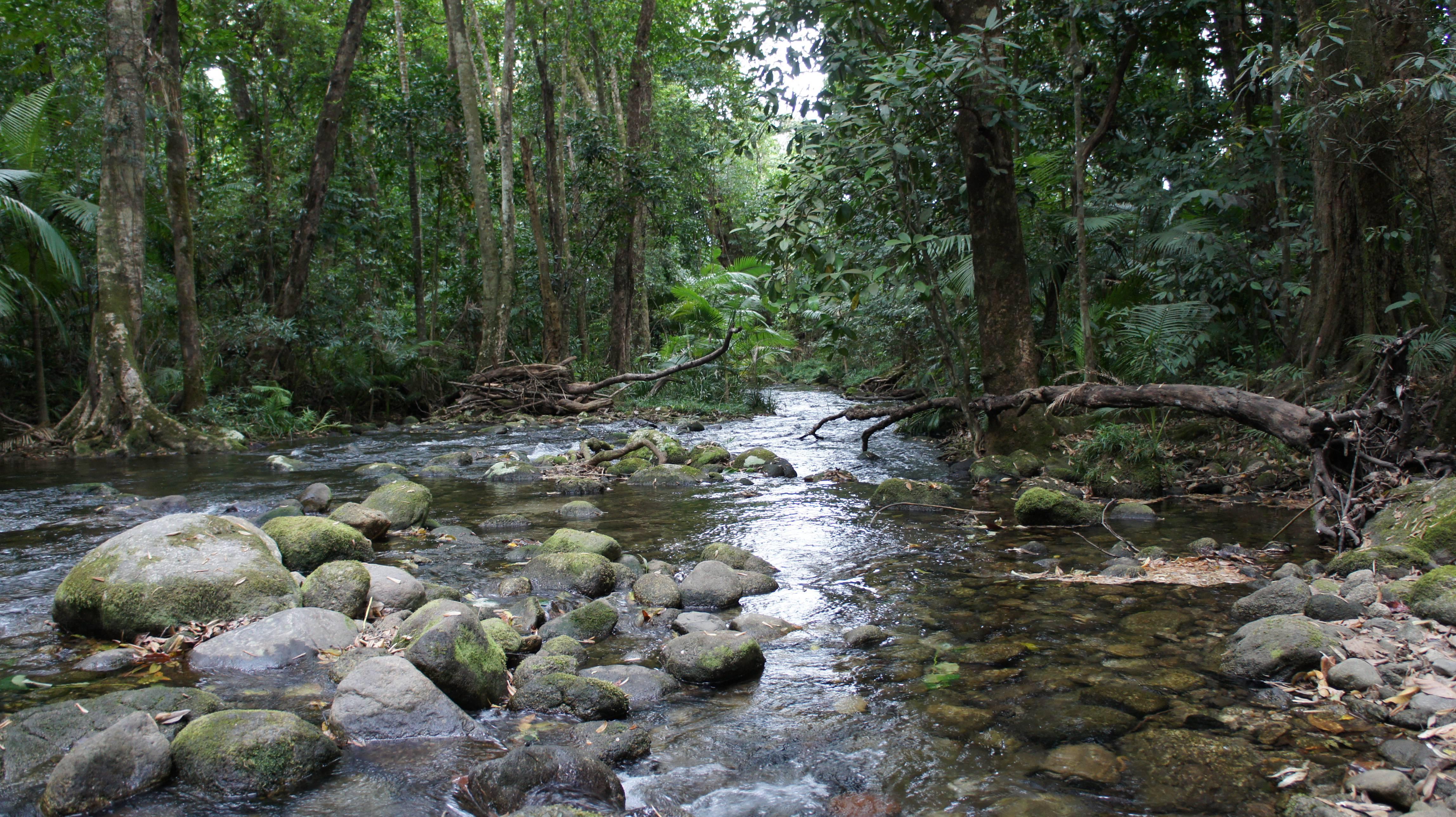 Photo 1: Daintree Rainforest: rencontre avec les Esprits de la forêt