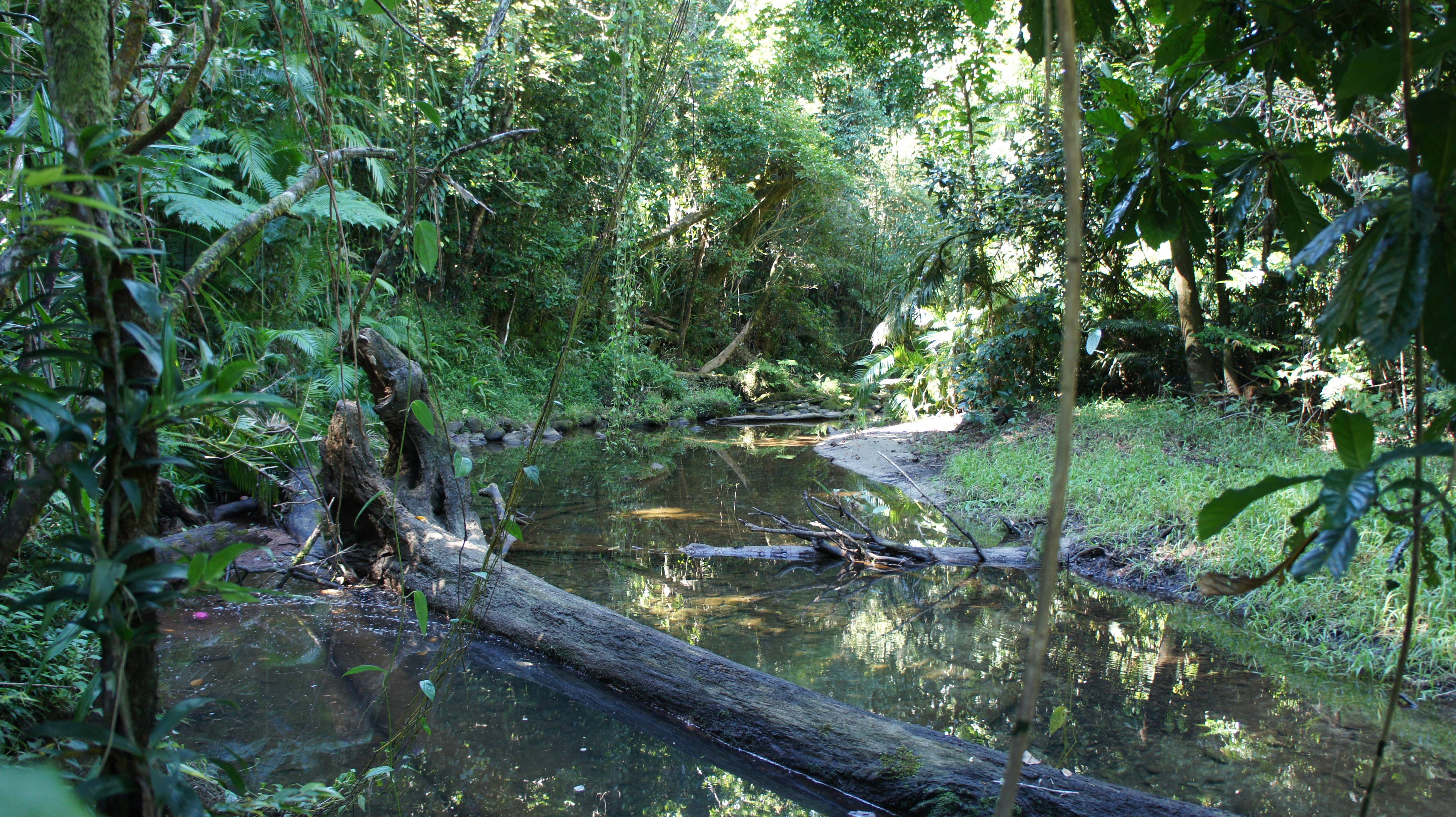 Photo 3: Daintree Rainforest: rencontre avec les Esprits de la forêt