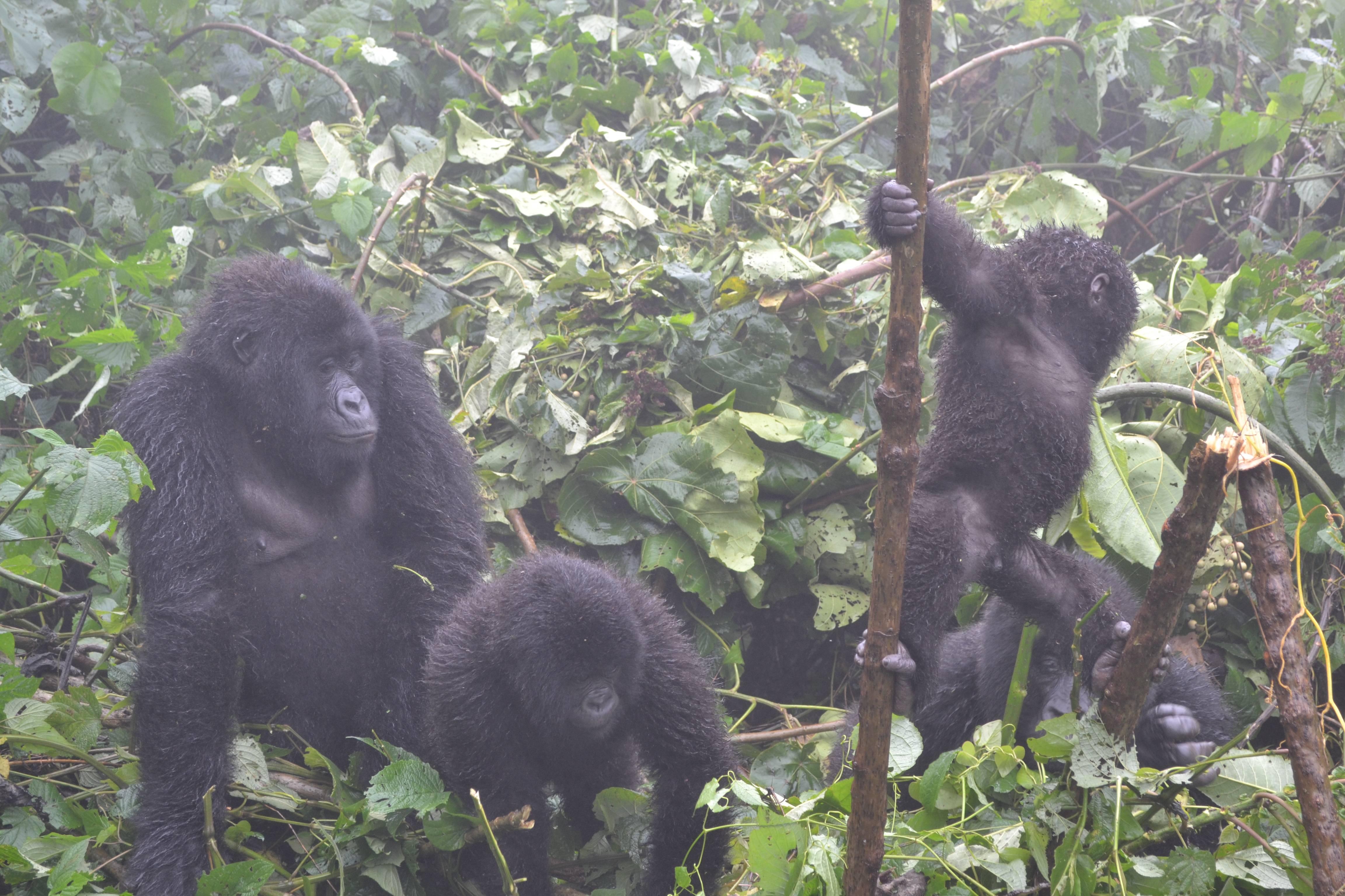 Photo 3: Parc Virunga en RDC