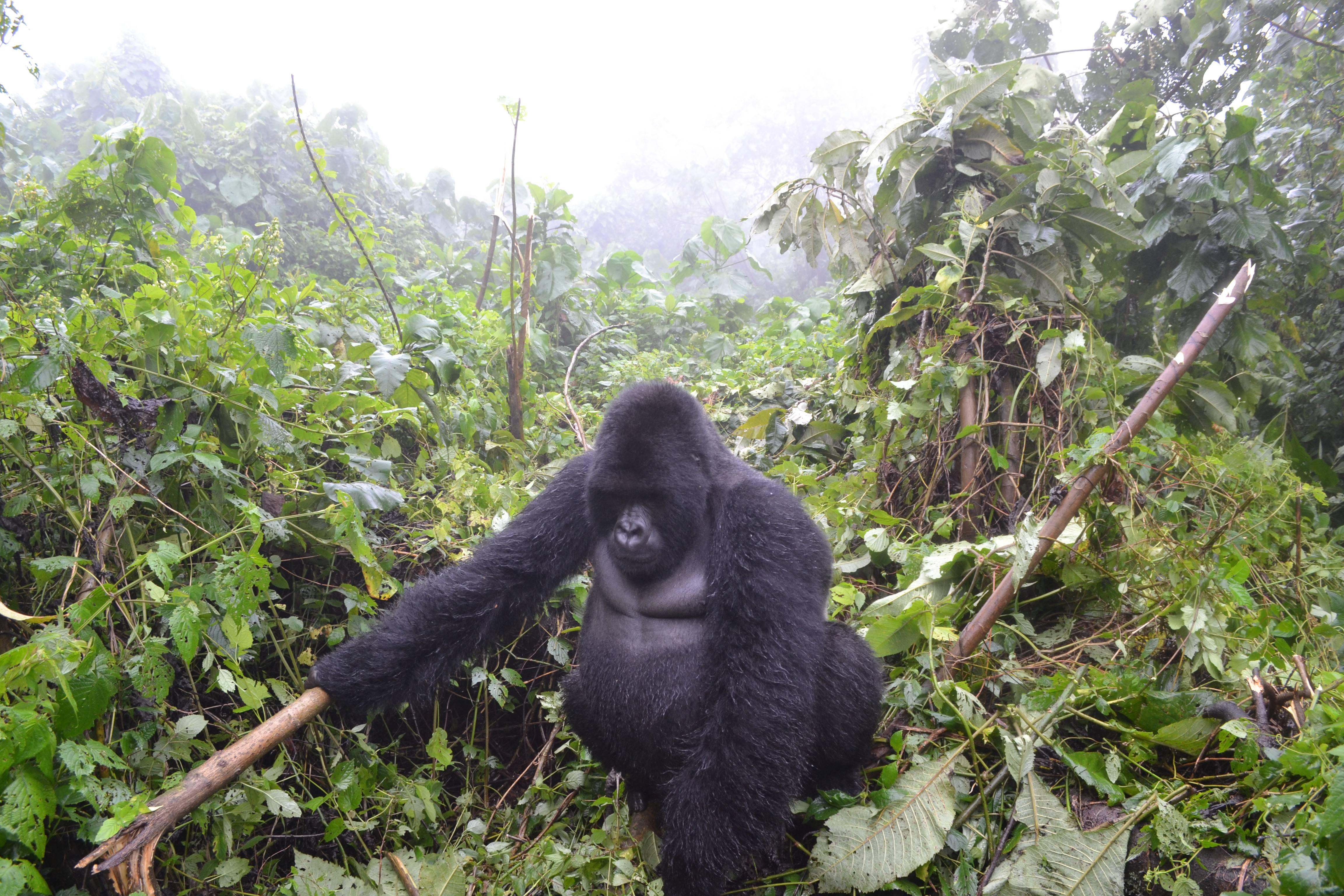 Photo 2: Parc Virunga en RDC