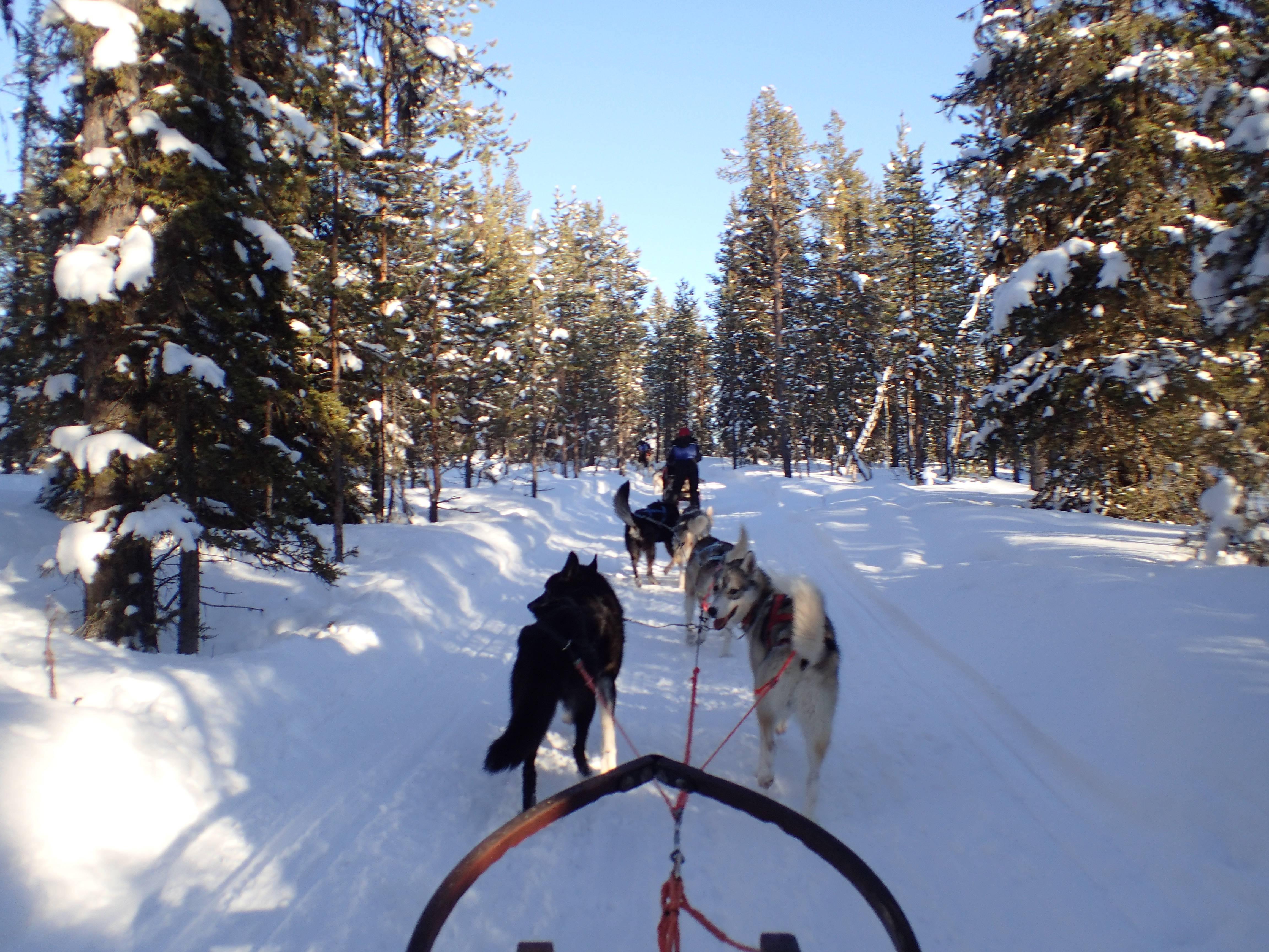 Photo 1: Une sortie en chiens de traineau, une expérience inoubliable !!!