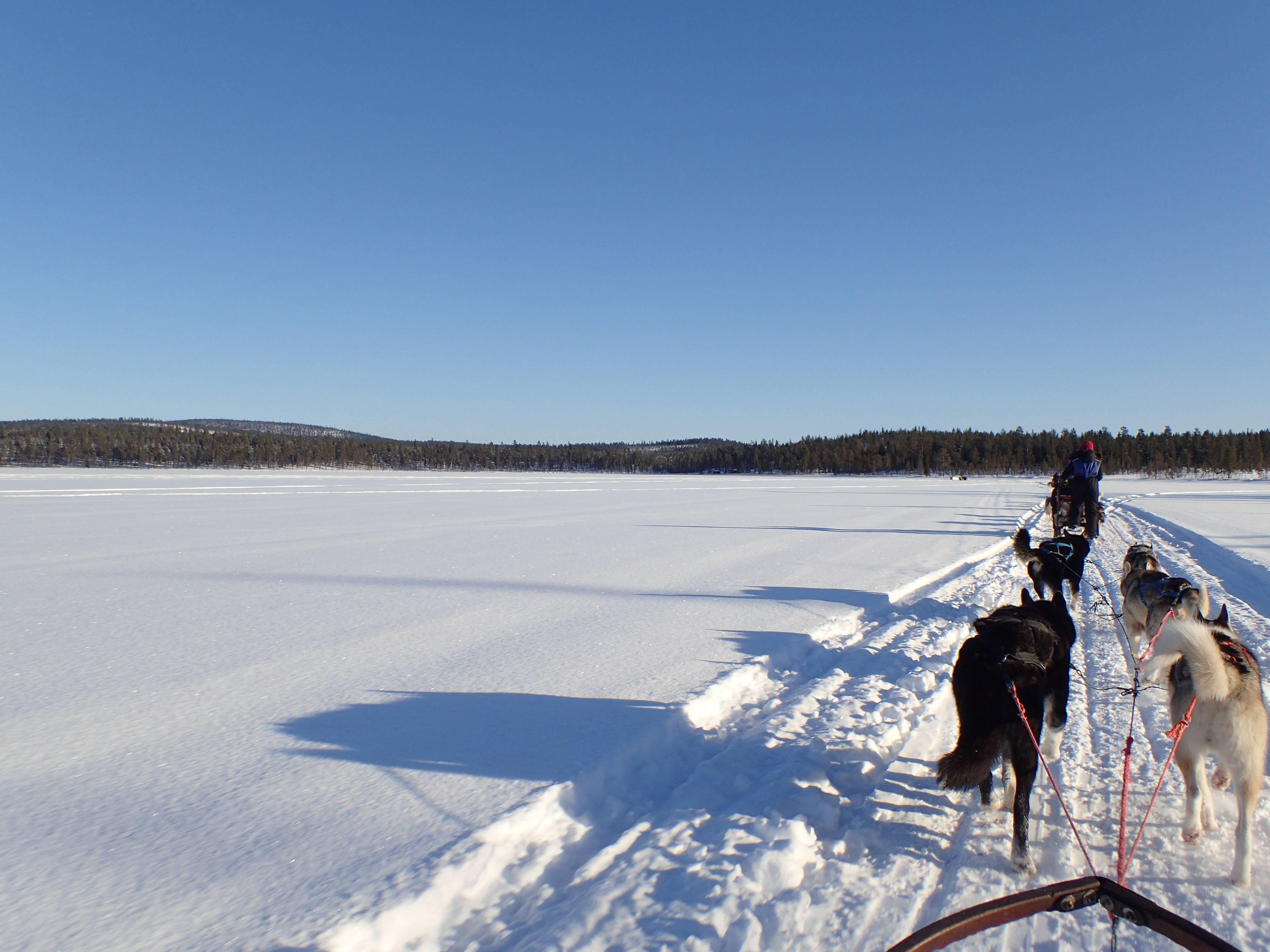 Photo 2: Une sortie en chiens de traineau, une expérience inoubliable !!!