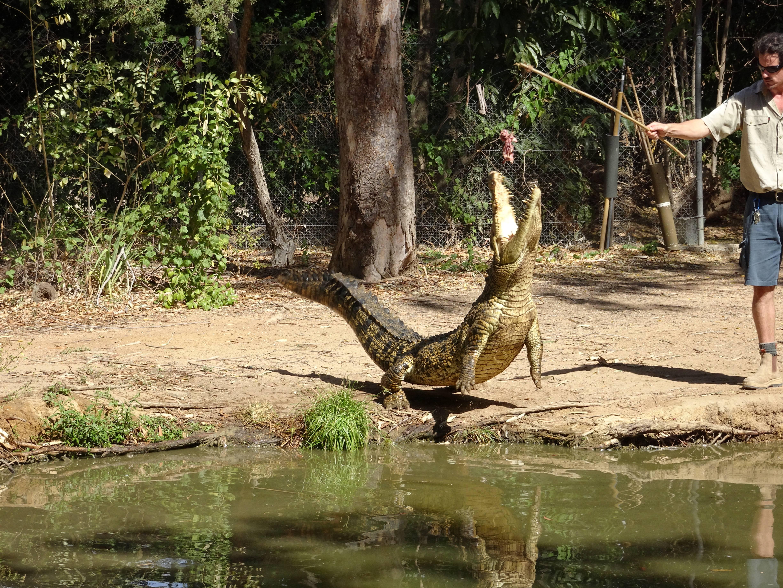 Photo 2: Billabong Sanctuary, un sanctuaire pour la faune Australienne