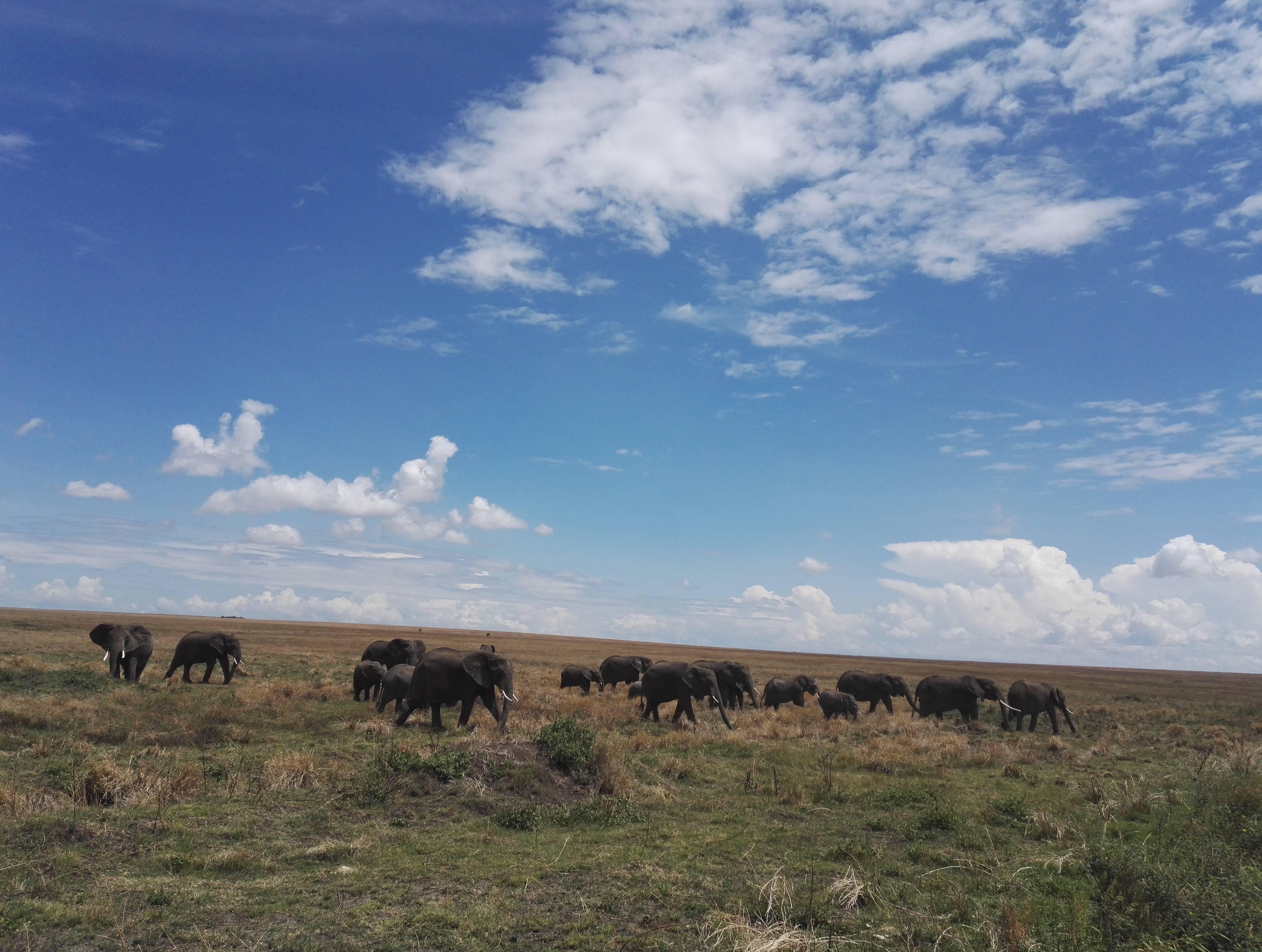 Photo 1: Parc national serengeti