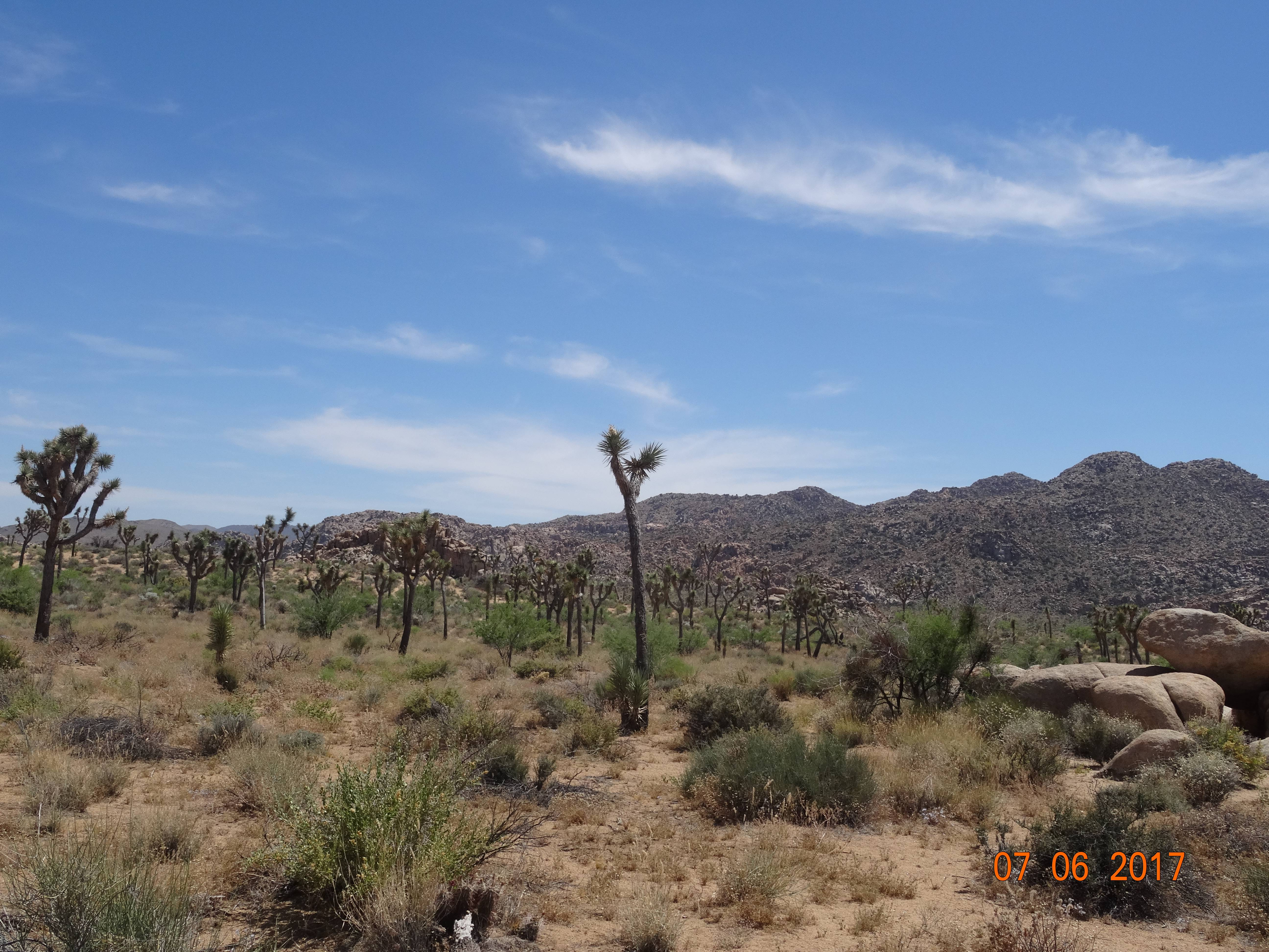 Photo 3: Joshua Tree National Park - USA