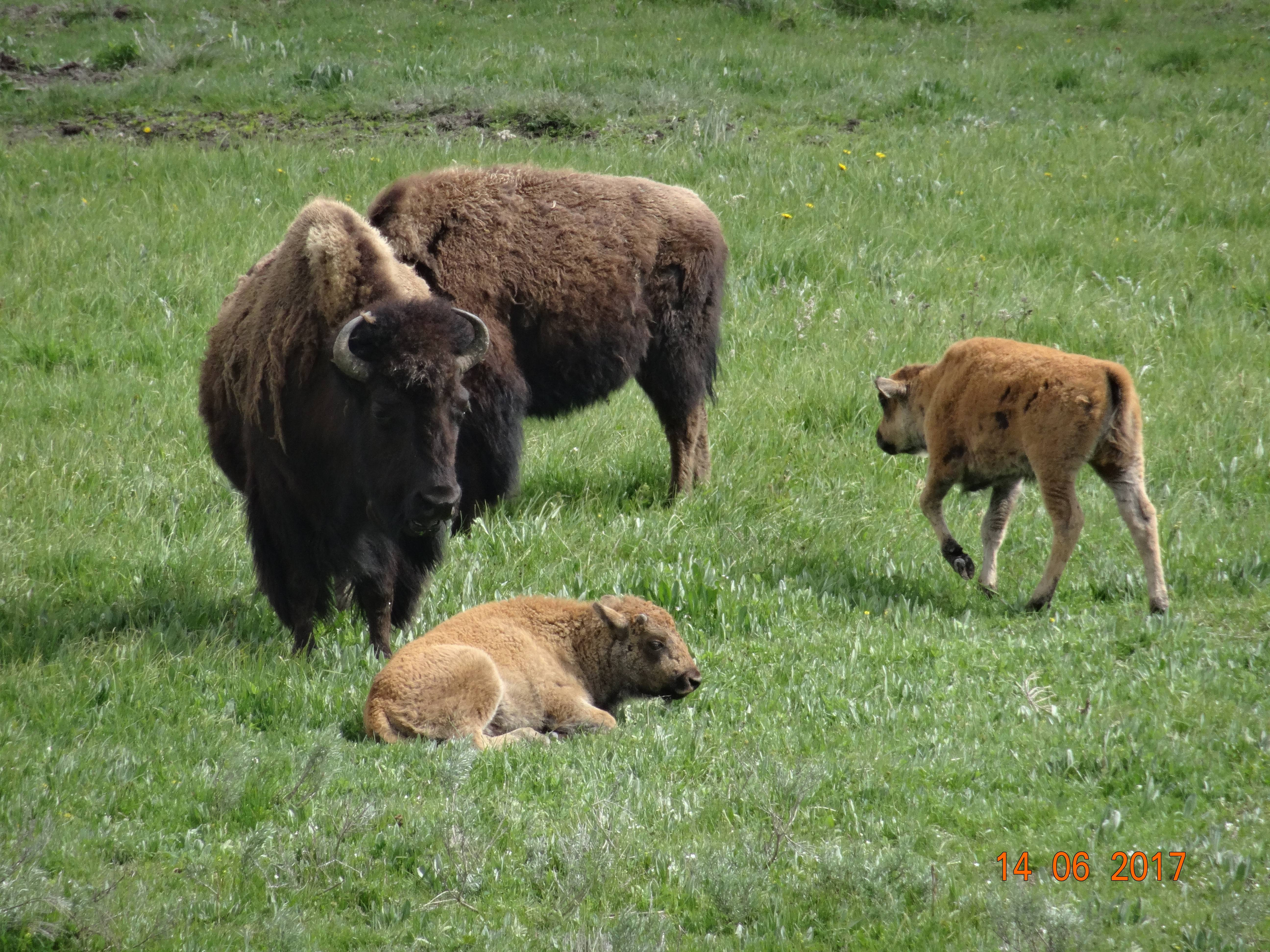Photo 2: Yellowstone, quel parc merveilleux....