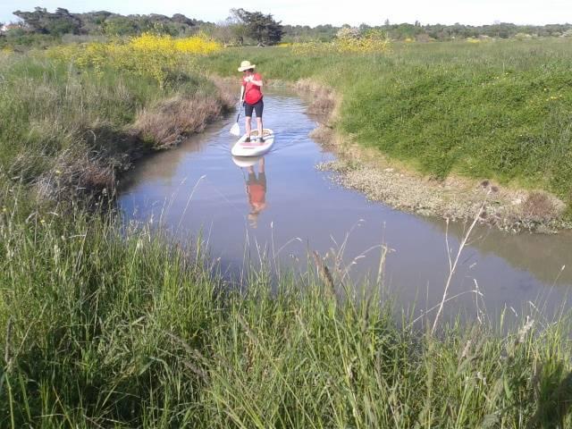 Photo 1: Balade dans le marais en Stand Up Paddle