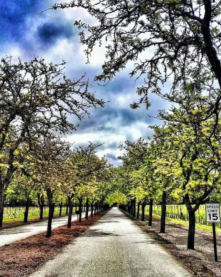 Photo 1: NapaValley Californie