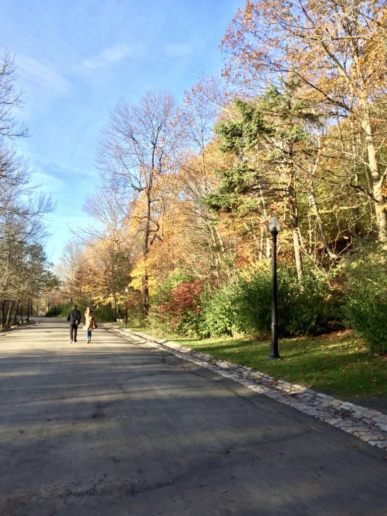 Photo 3: Parc du Mont-Royal