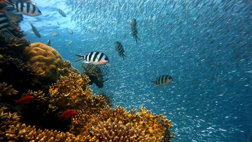 Photo 2: Snorkeling avec les Raies Manta
