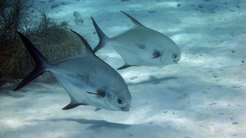 Photo 3: Snorkeling avec les Raies Manta