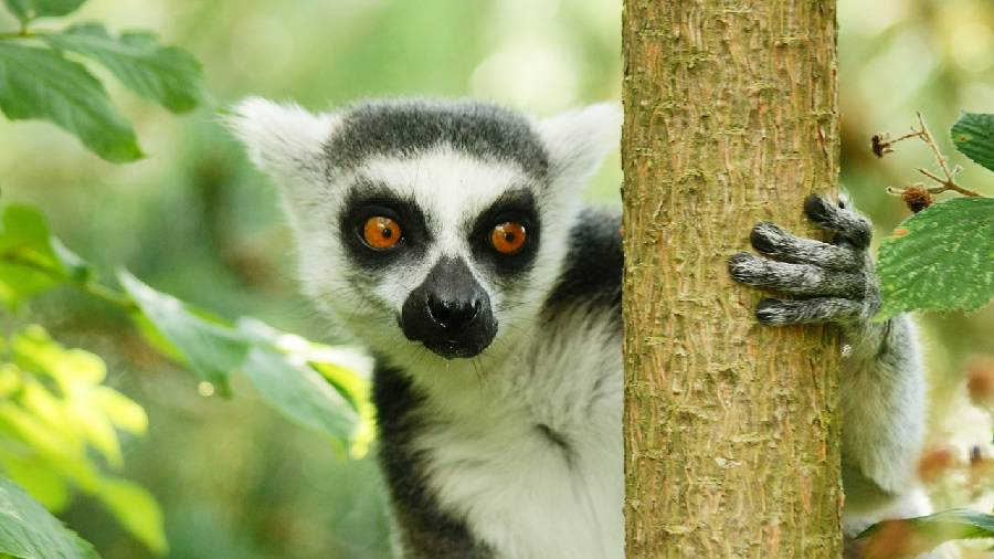 Photo 1: Madagascar, cap sur Diego Suarez