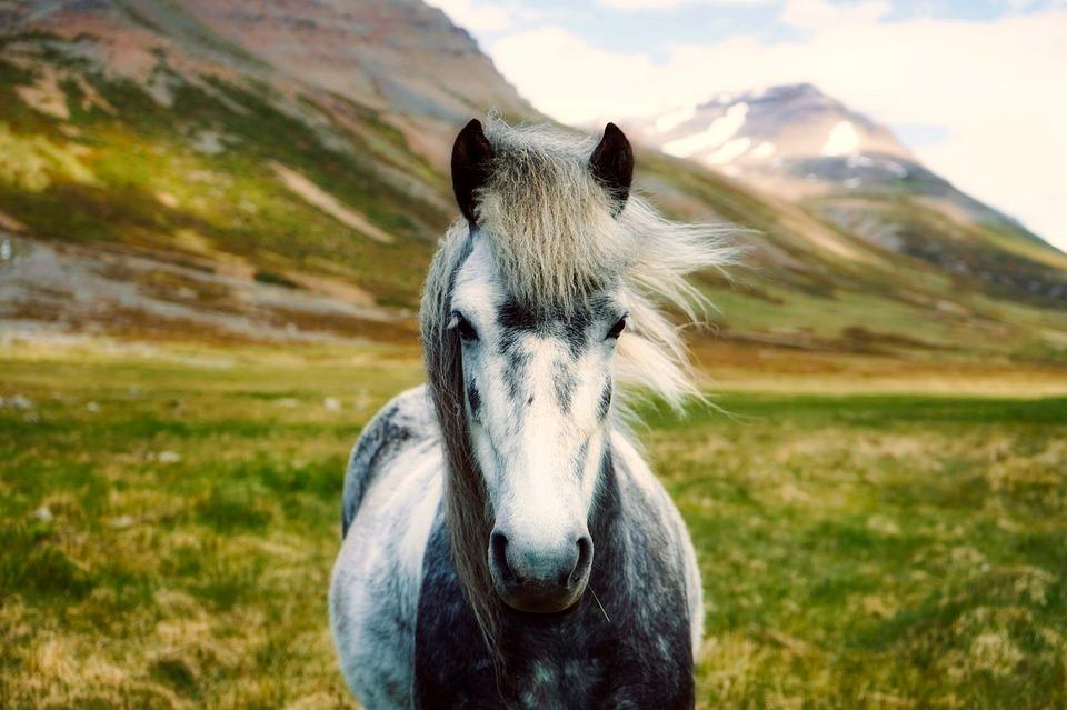 Photo 1: Islande, un véritable coup de cœur pour toute la famille
