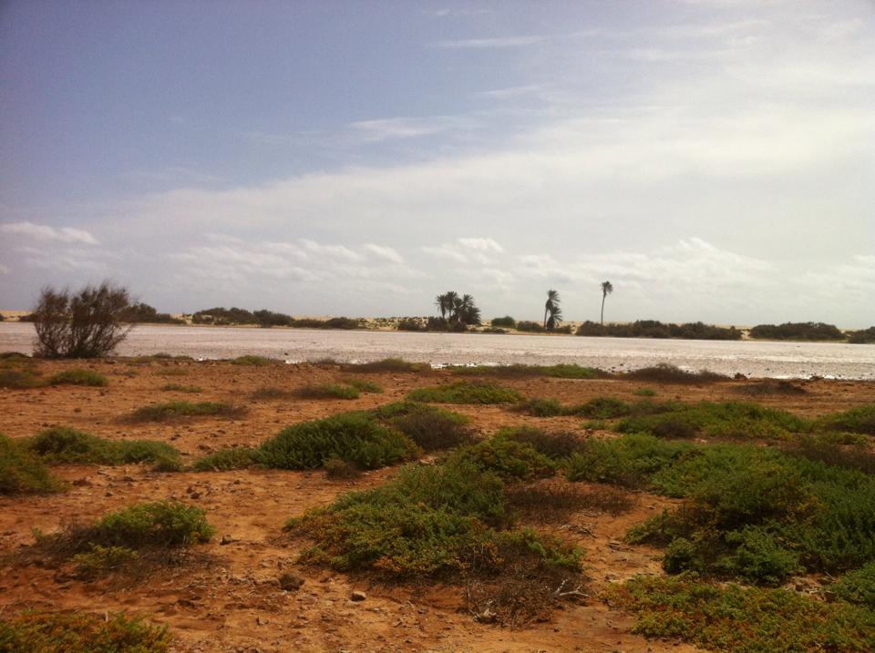 Photo 1: Boa-Vista, l'île autrefois verdoyante qui offre un paysage lunaire