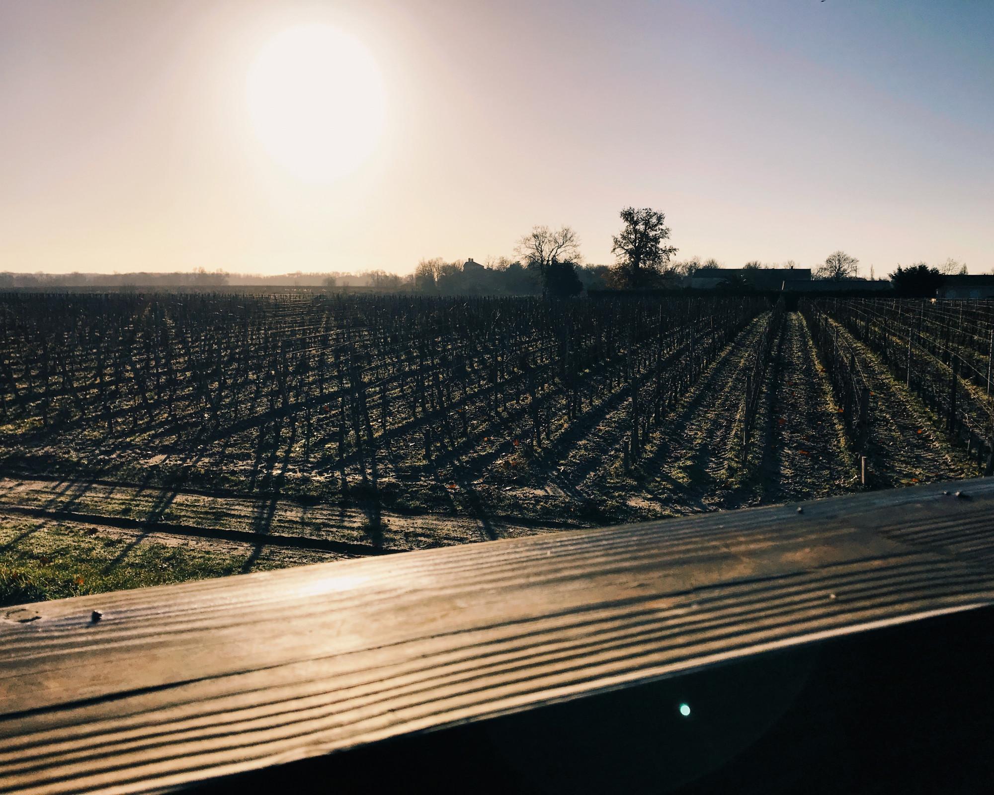 Photo 2: Chateau Lamothe-Bergeron, l'histoire du vin 2.0