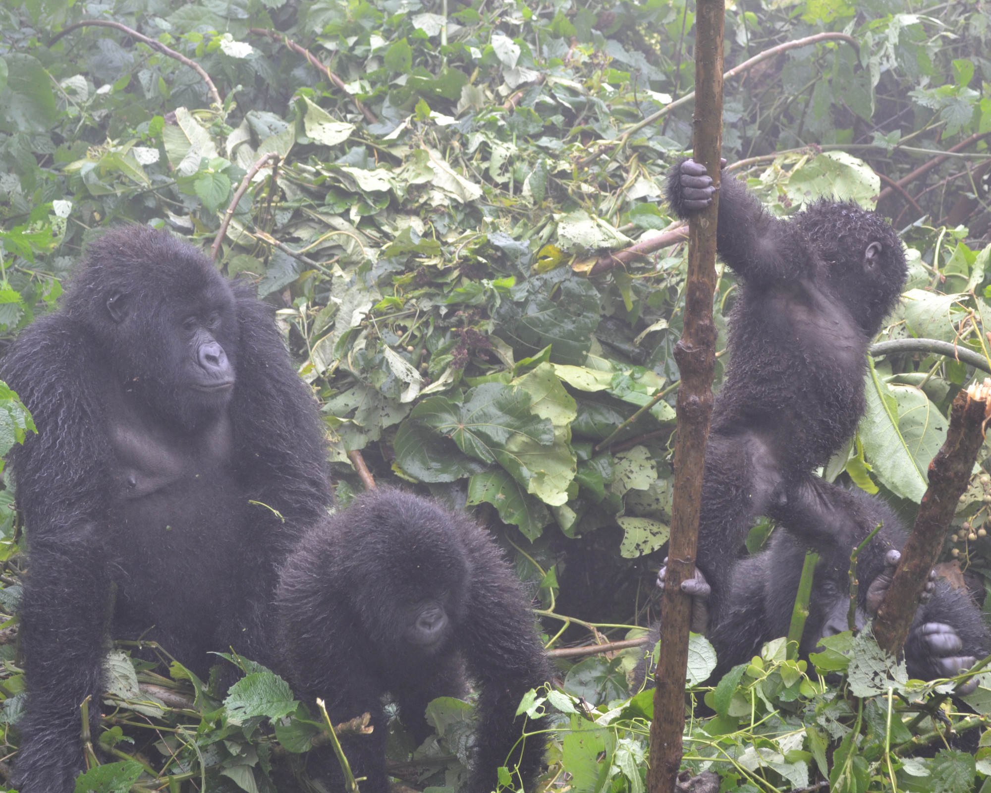 Photo 3: Parc Virunga en RDC