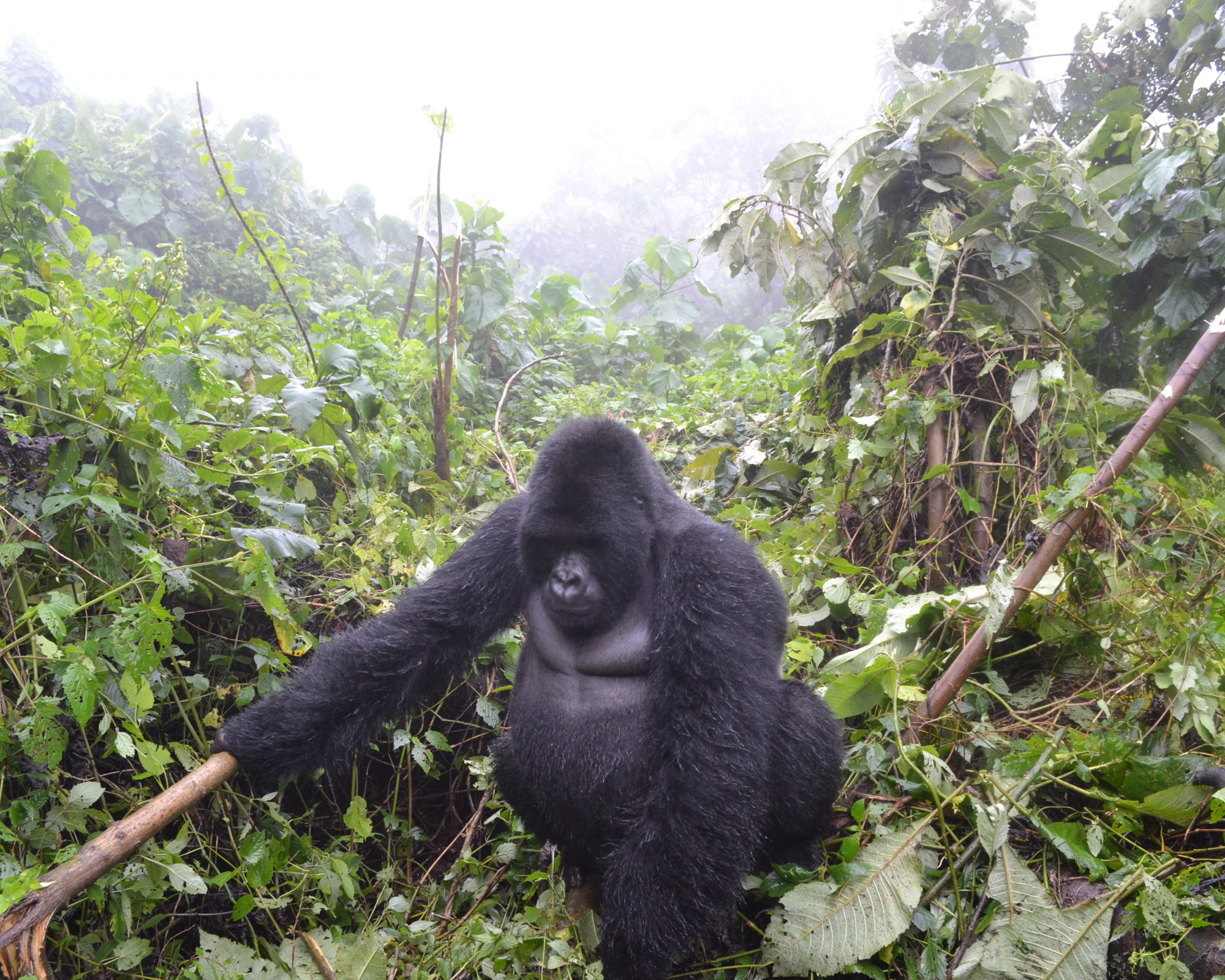 Photo 2: Parc Virunga en RDC