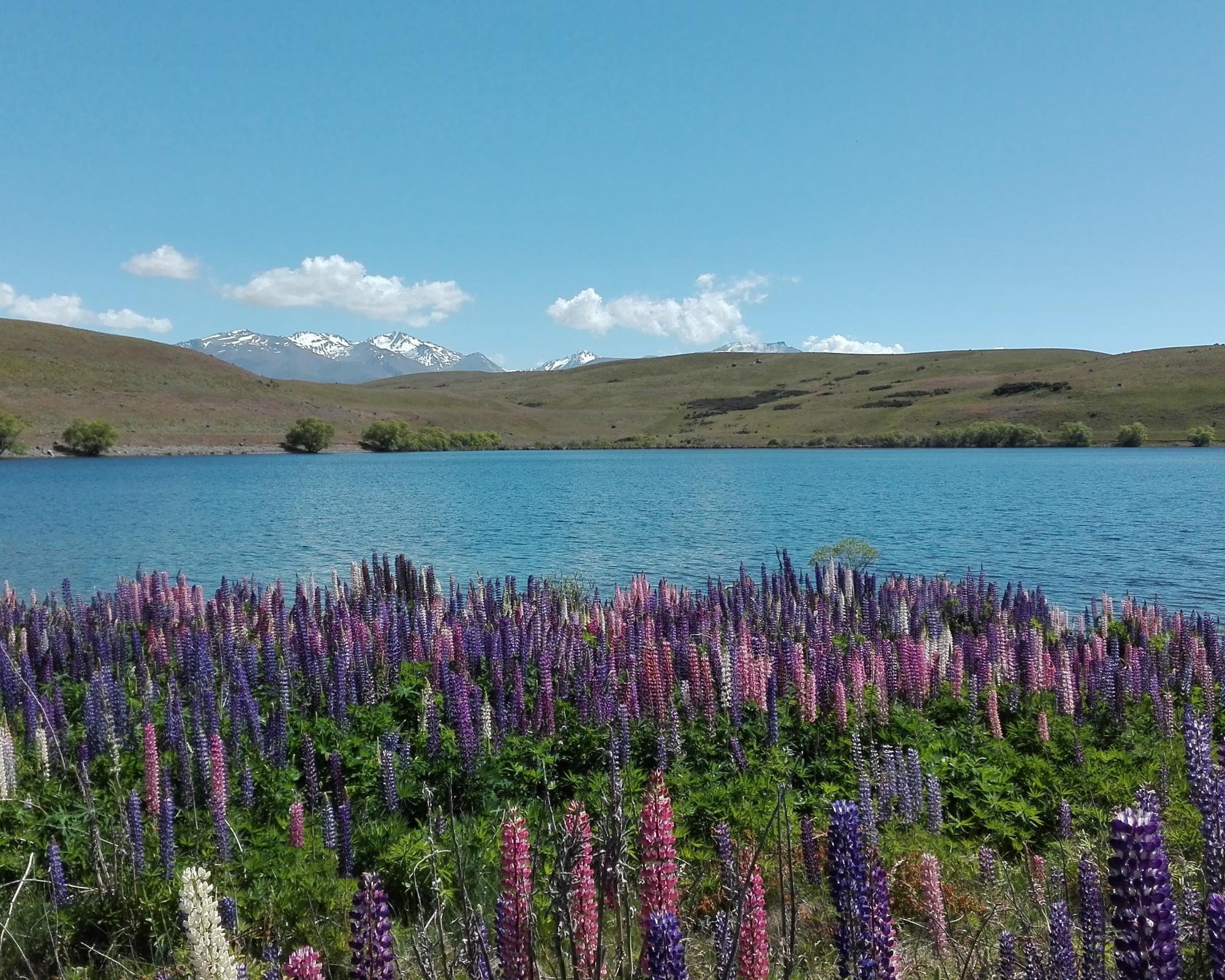 Photo 2: Lake Tekapo en Nouvelle-Zélande, la nature à l'état pur...